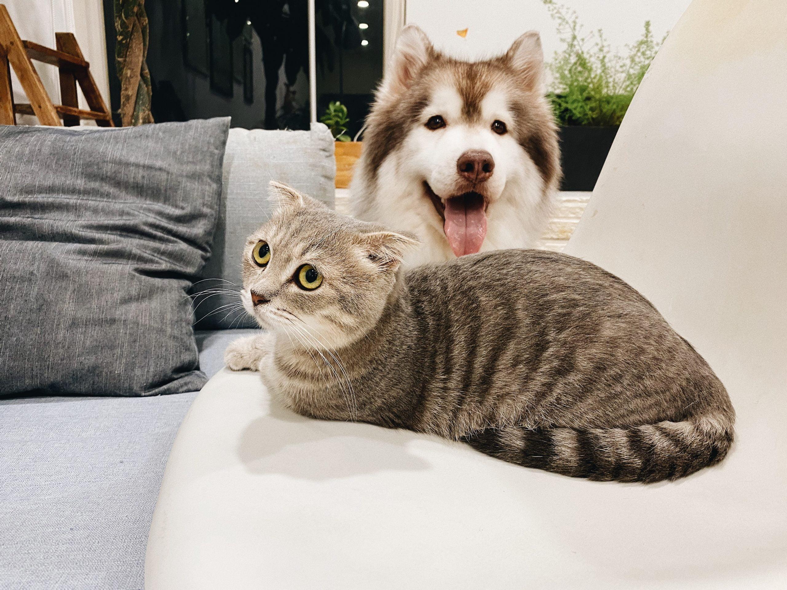 ¿Los perros pueden ser alérgicos a los gatos?