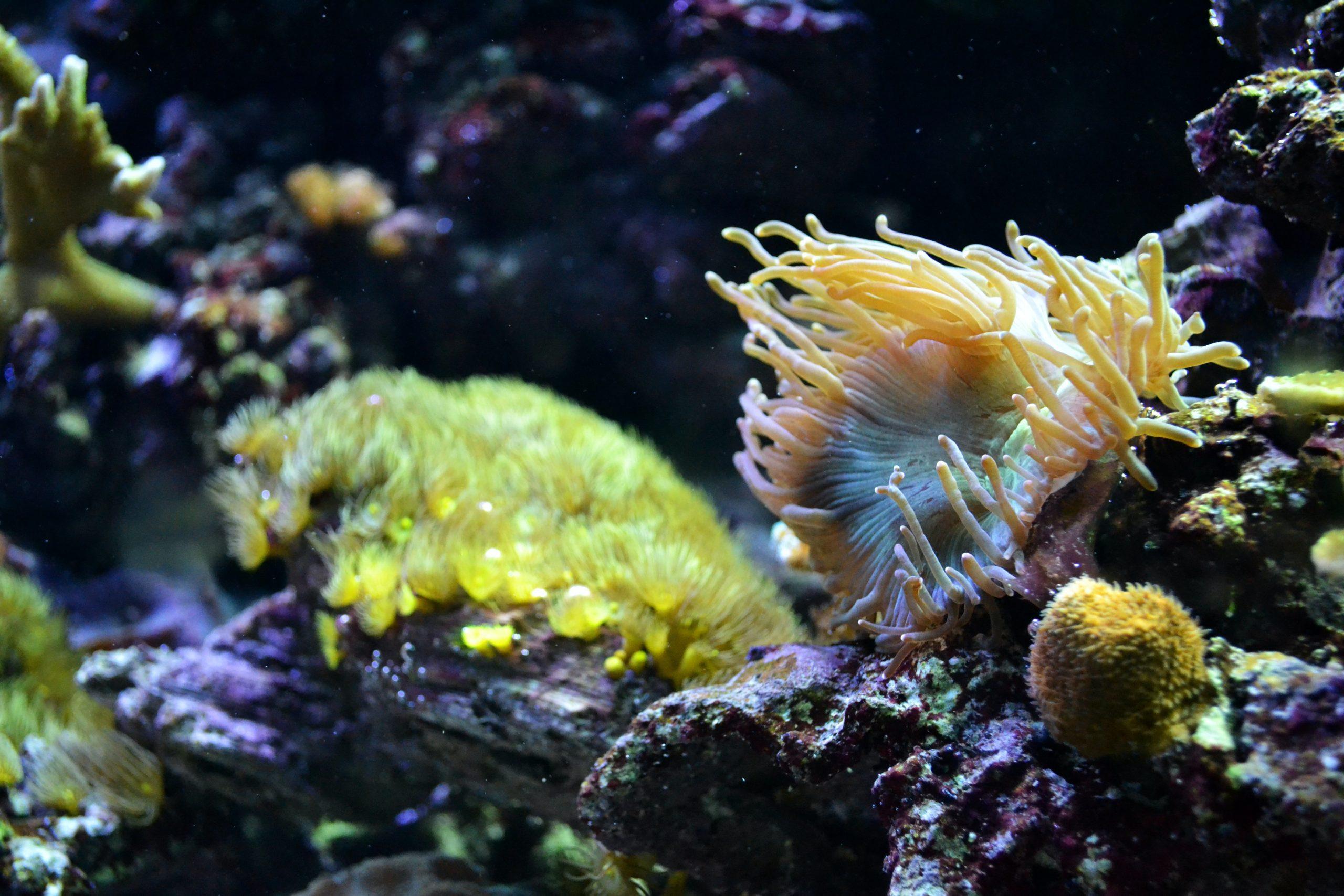 Roca Viva: la guía definitiva para el acuario de roca viva y seca 1