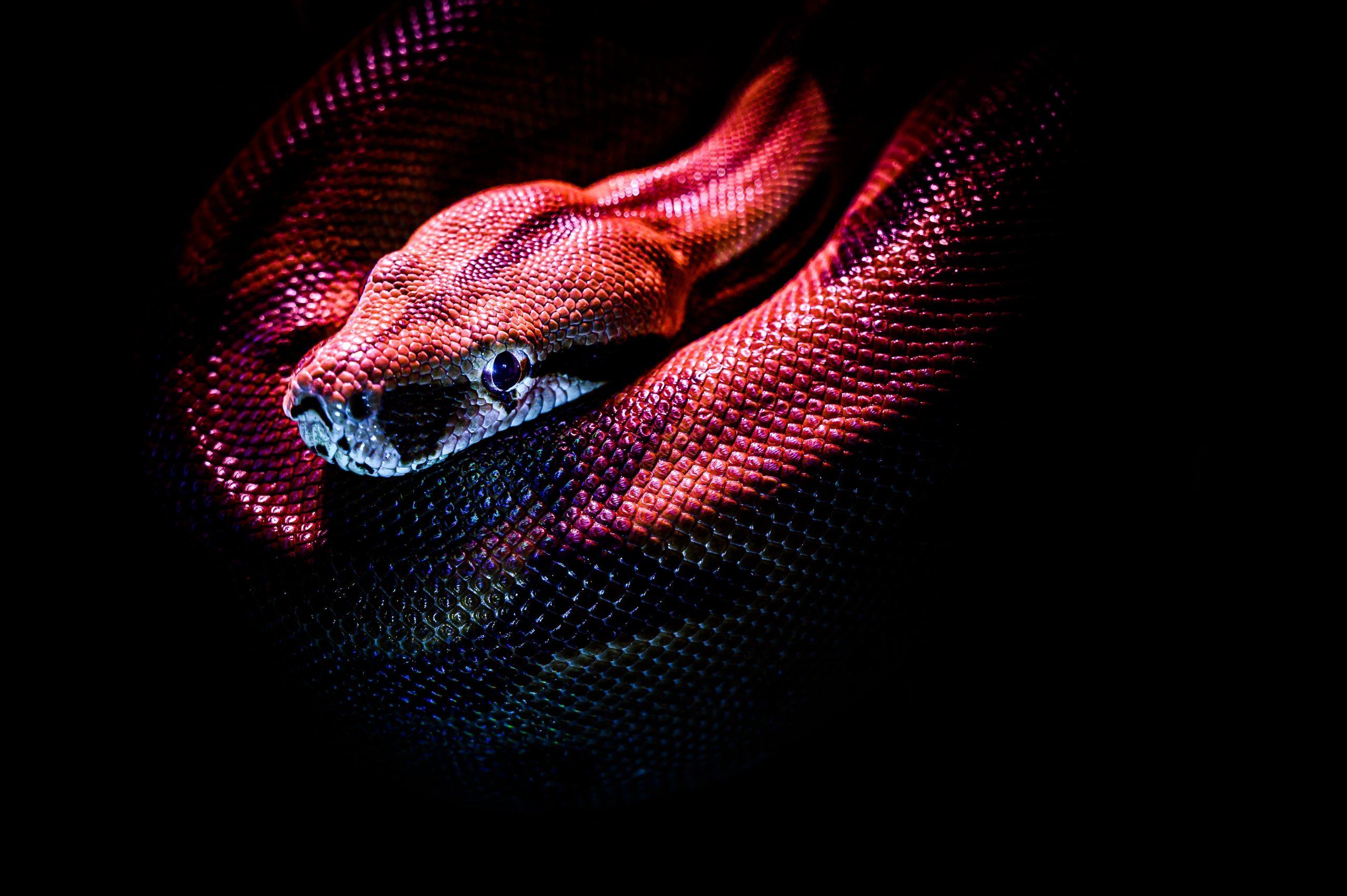 ¿Por qué bostezan las serpientes? 1