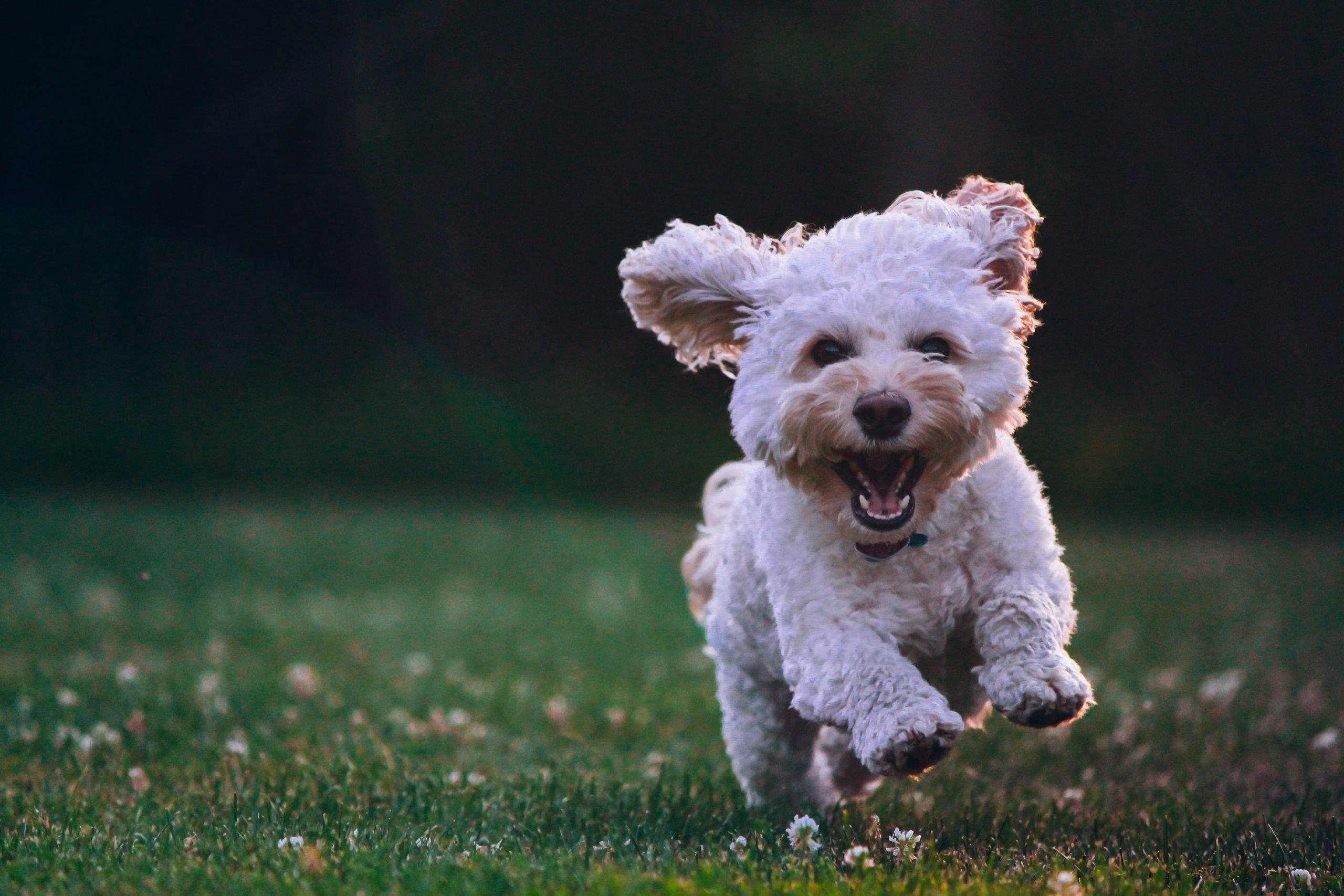 Cachorro respirando rápido: ¿Deberías preocuparte?