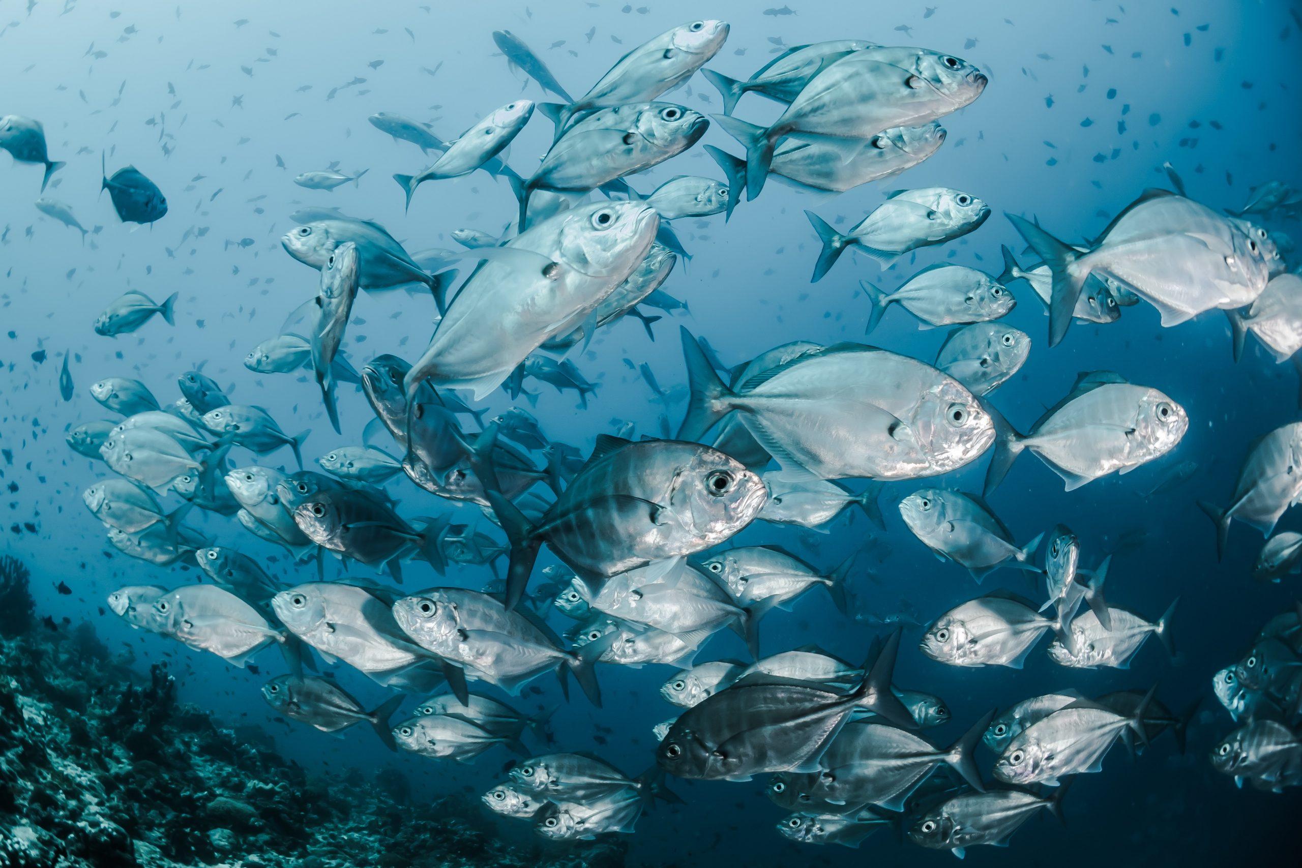 ¿Los peces beben agua? 1