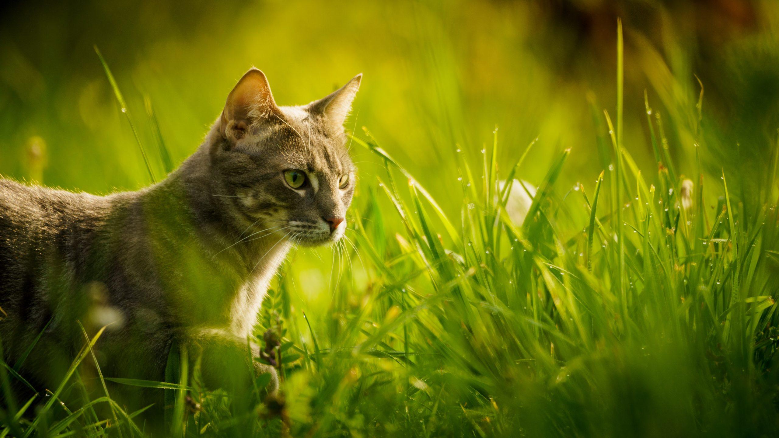 La mejor hierba para gatos [year] (análisis y guía) 1