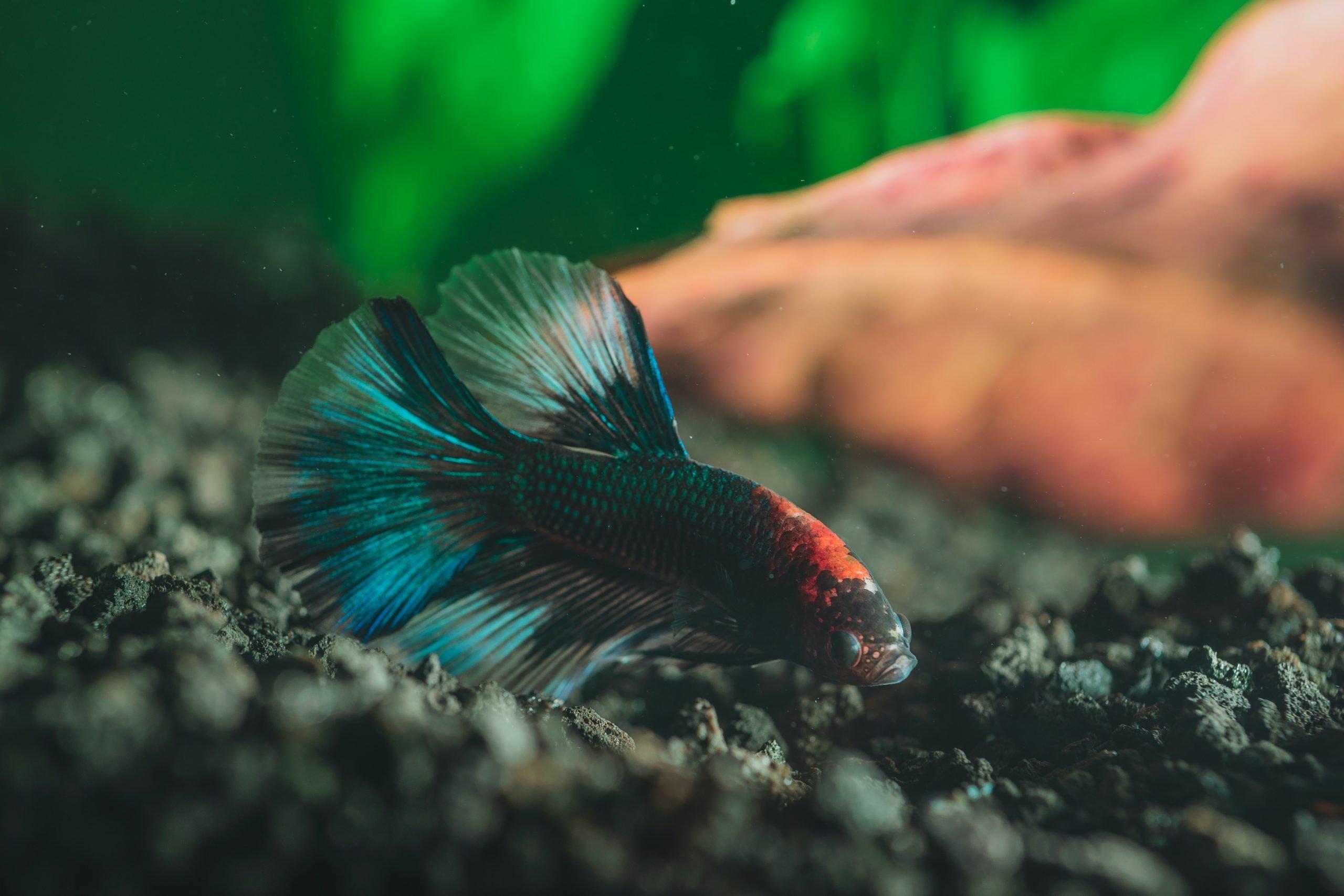Mejores sustratos para acuarios [year] (análisis) 1