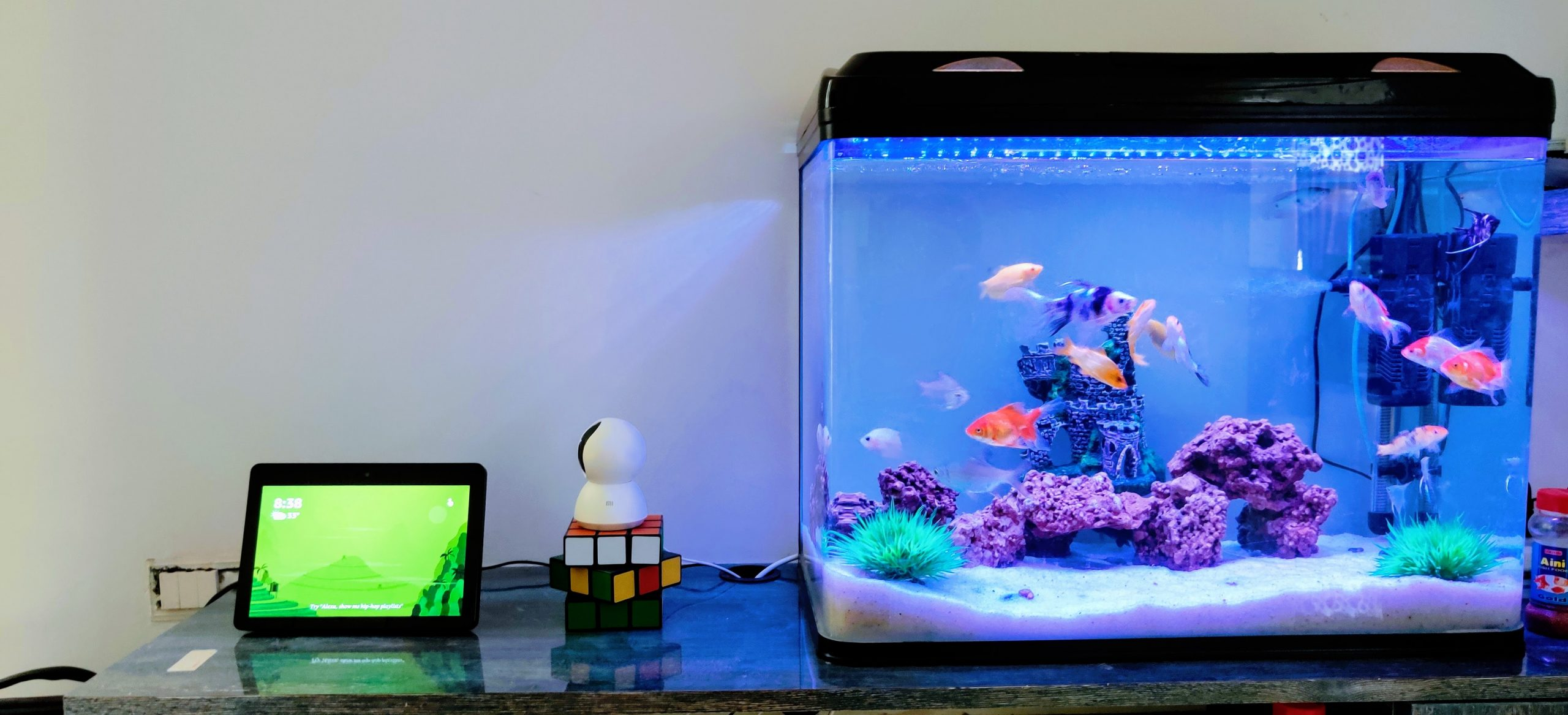 clear glass fish tank with blue fish