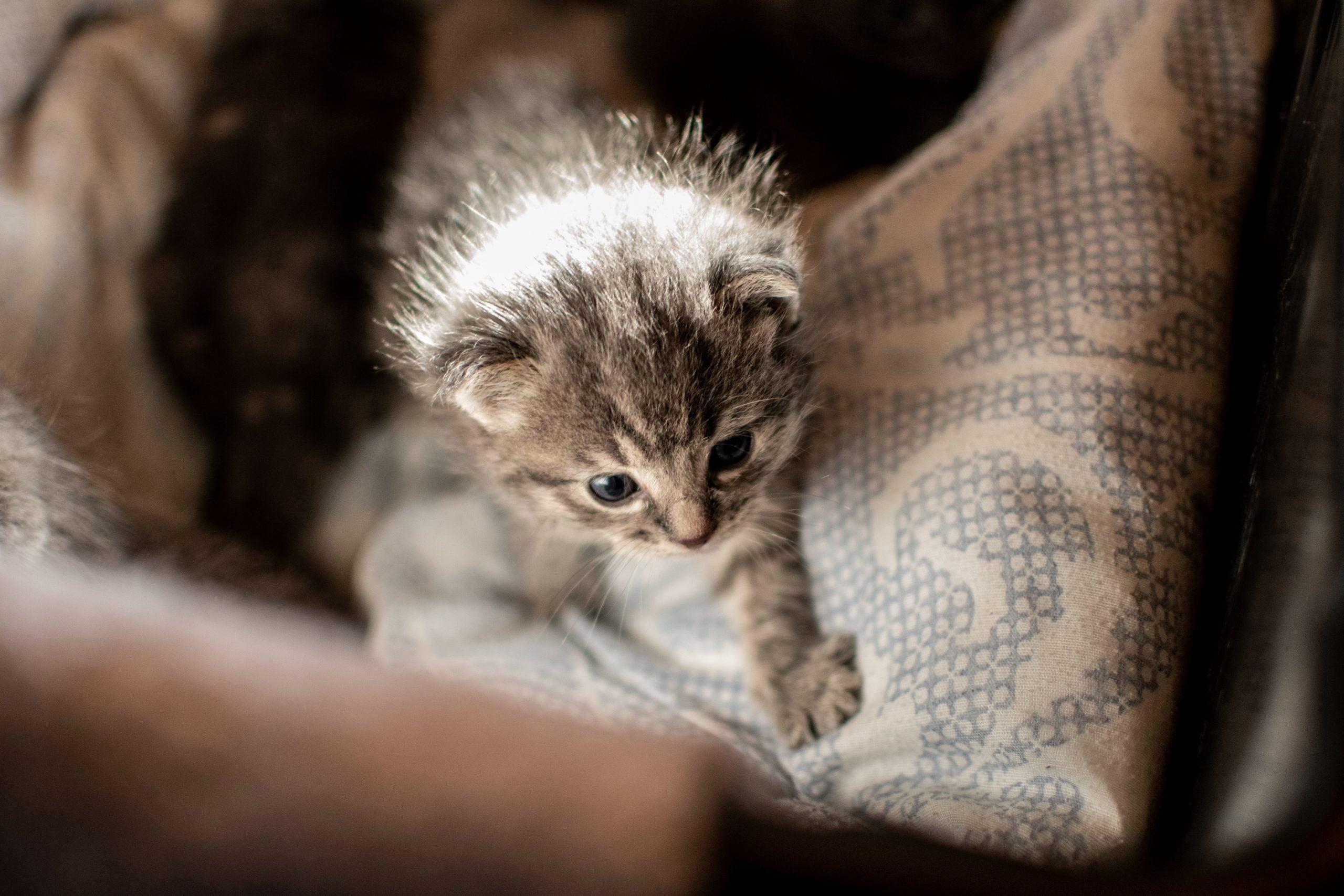 Síndrome del gatito desvanecido: causas, síntomas y tratamientos 1