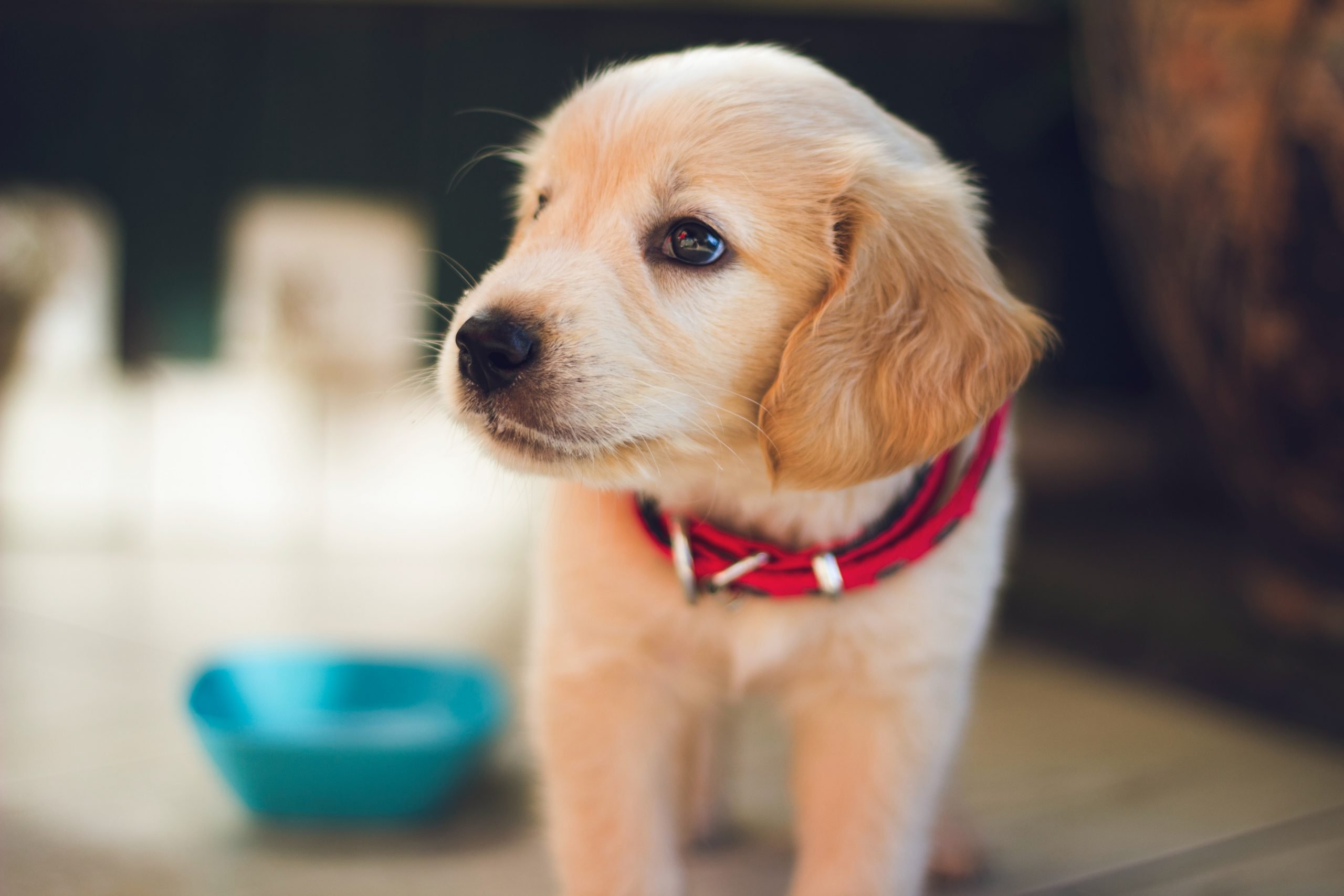 Cómo convencer a tus padres para adoptar un perro: consejos para una conversación exitosa 1