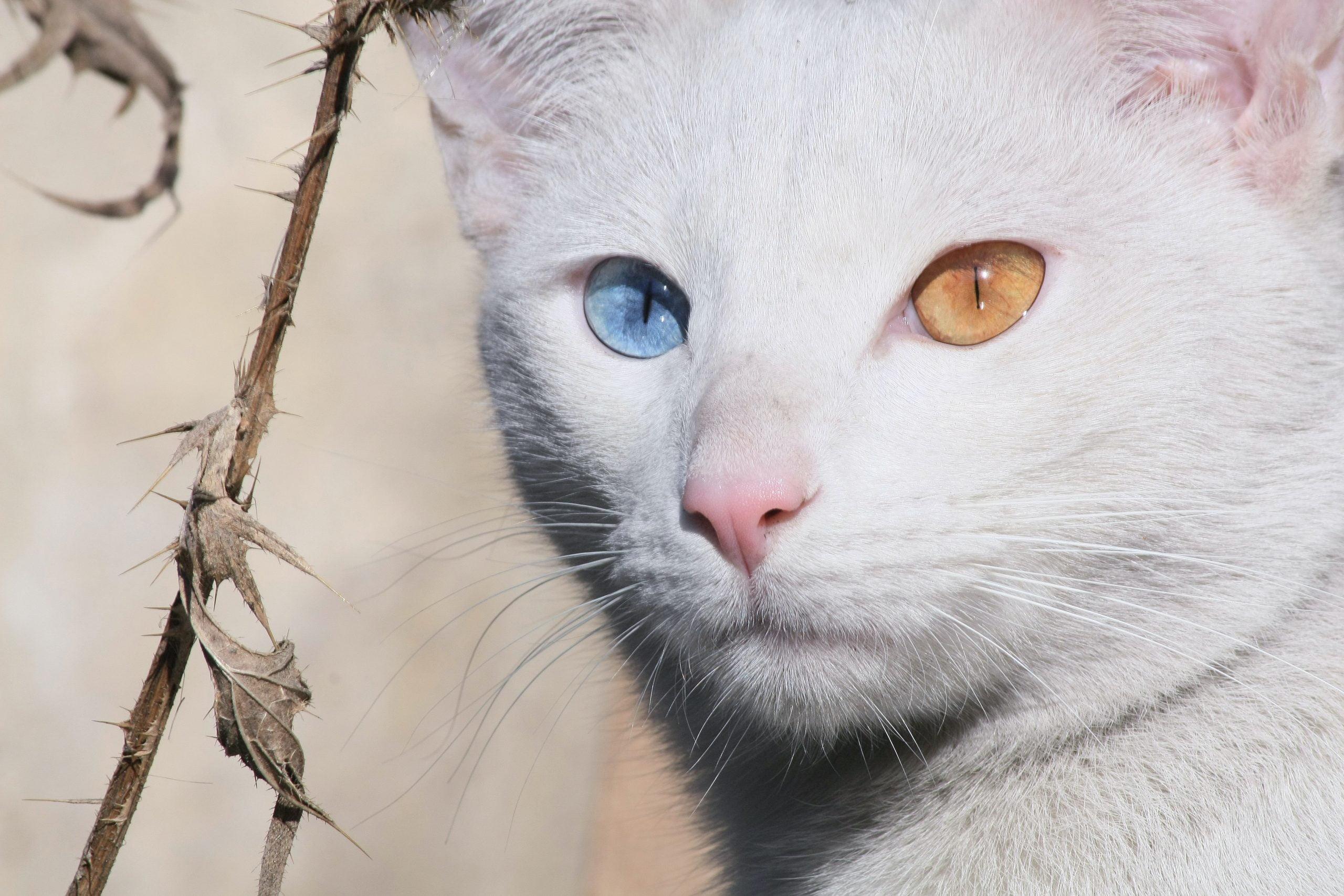 ¿Cuándo cambian de color los ojos de los gatitos? 1