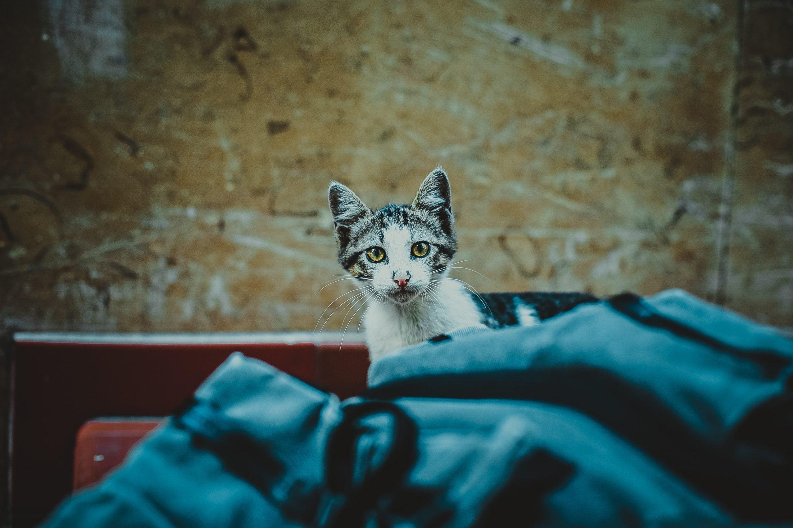 Qué hacer si encuentras un gatito abandonado 1