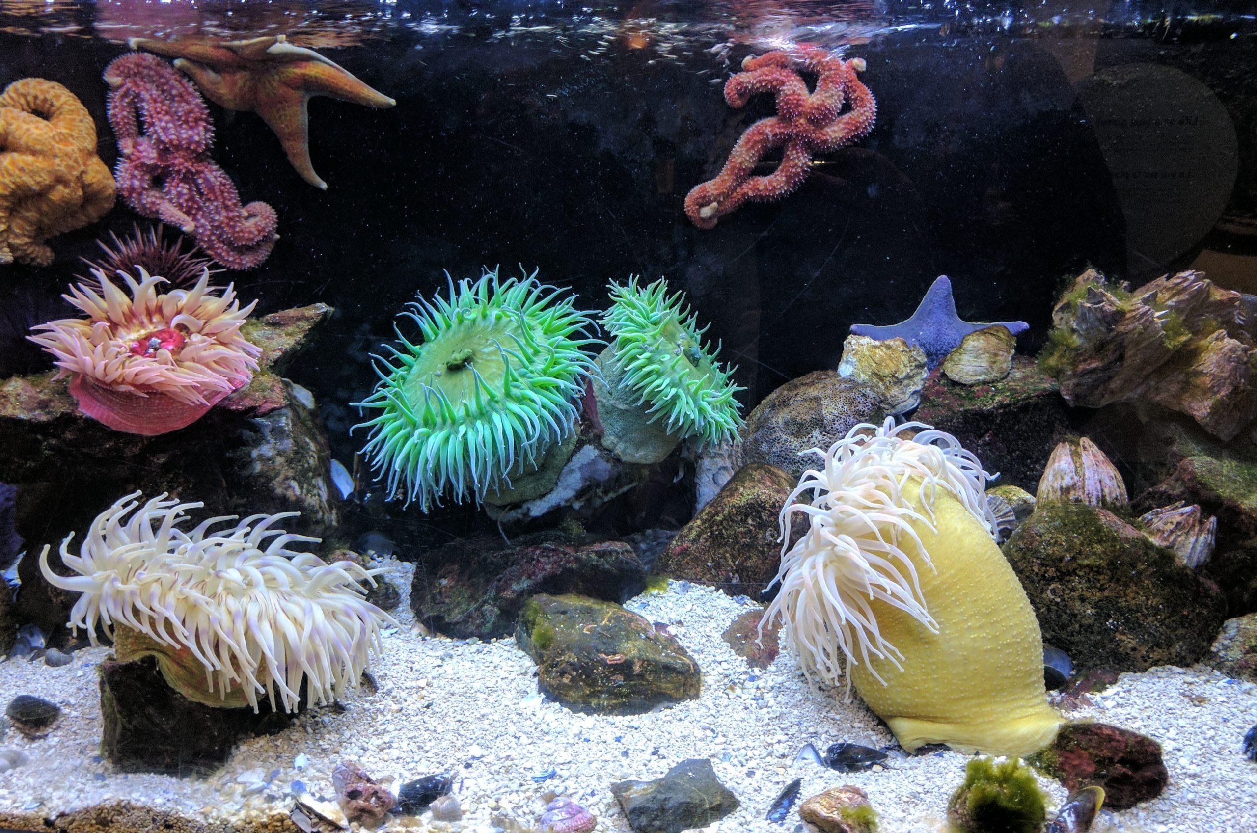 photography of aquarium with corals