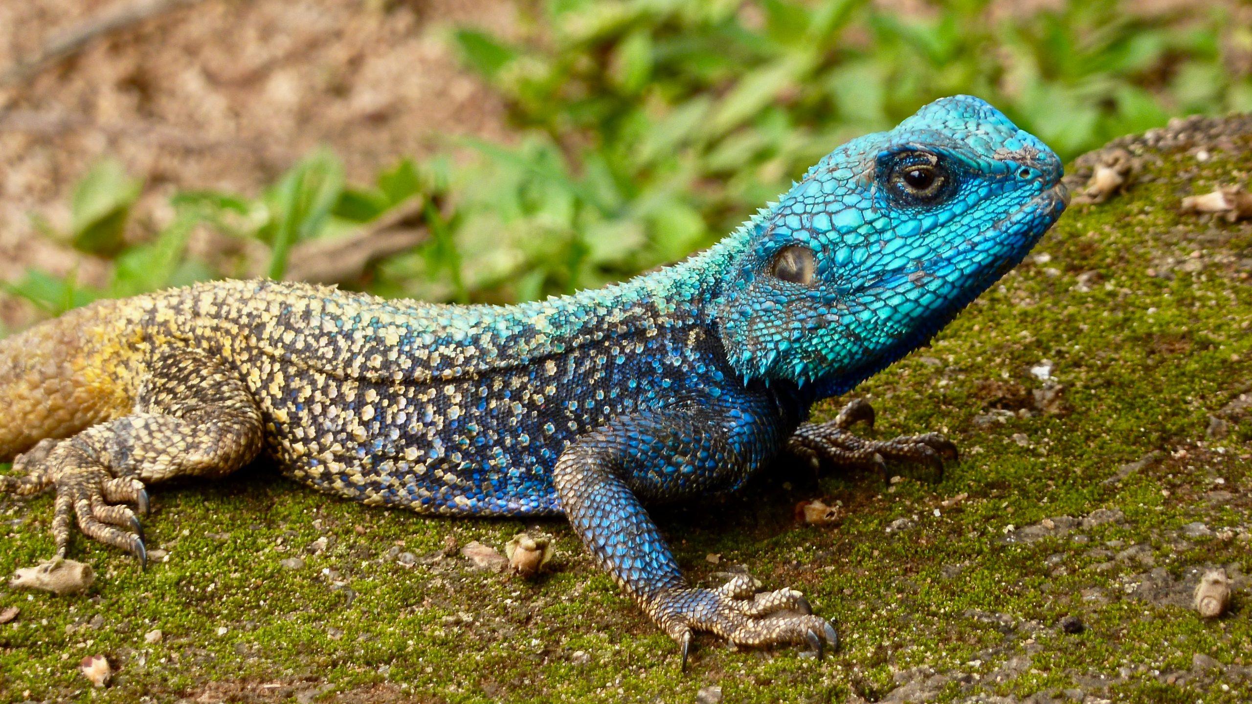 Las mejores incubadoras de reptiles [year] (análisis) 1