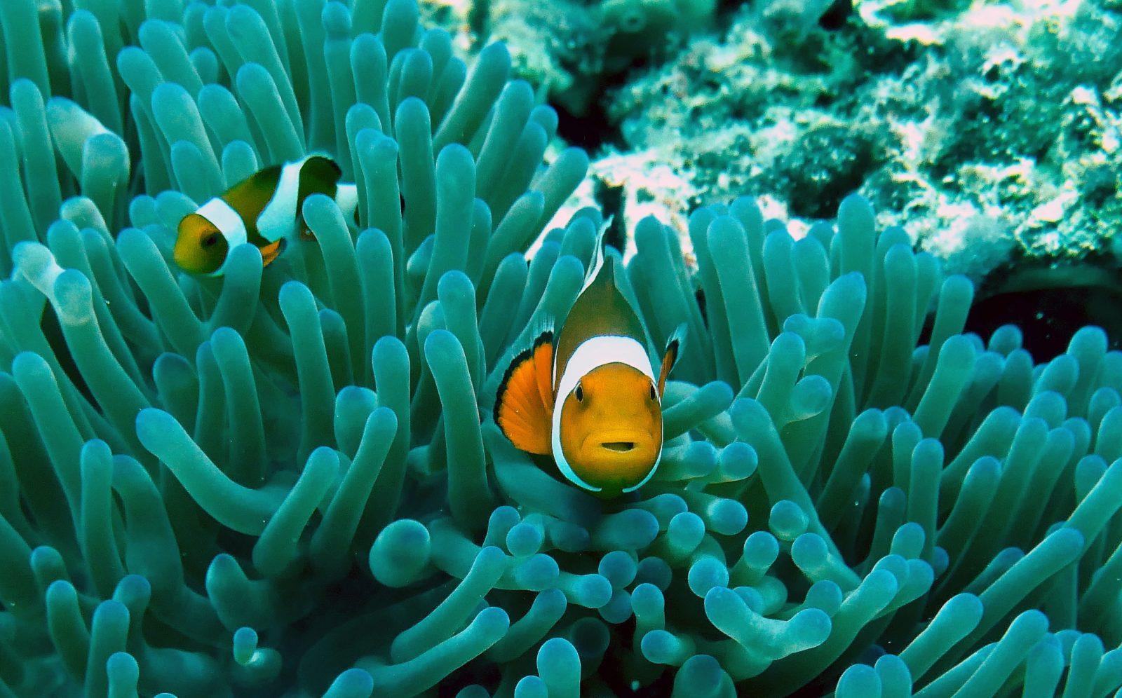 Cómo se aparean los peces: 7 hechos que no sabías 1