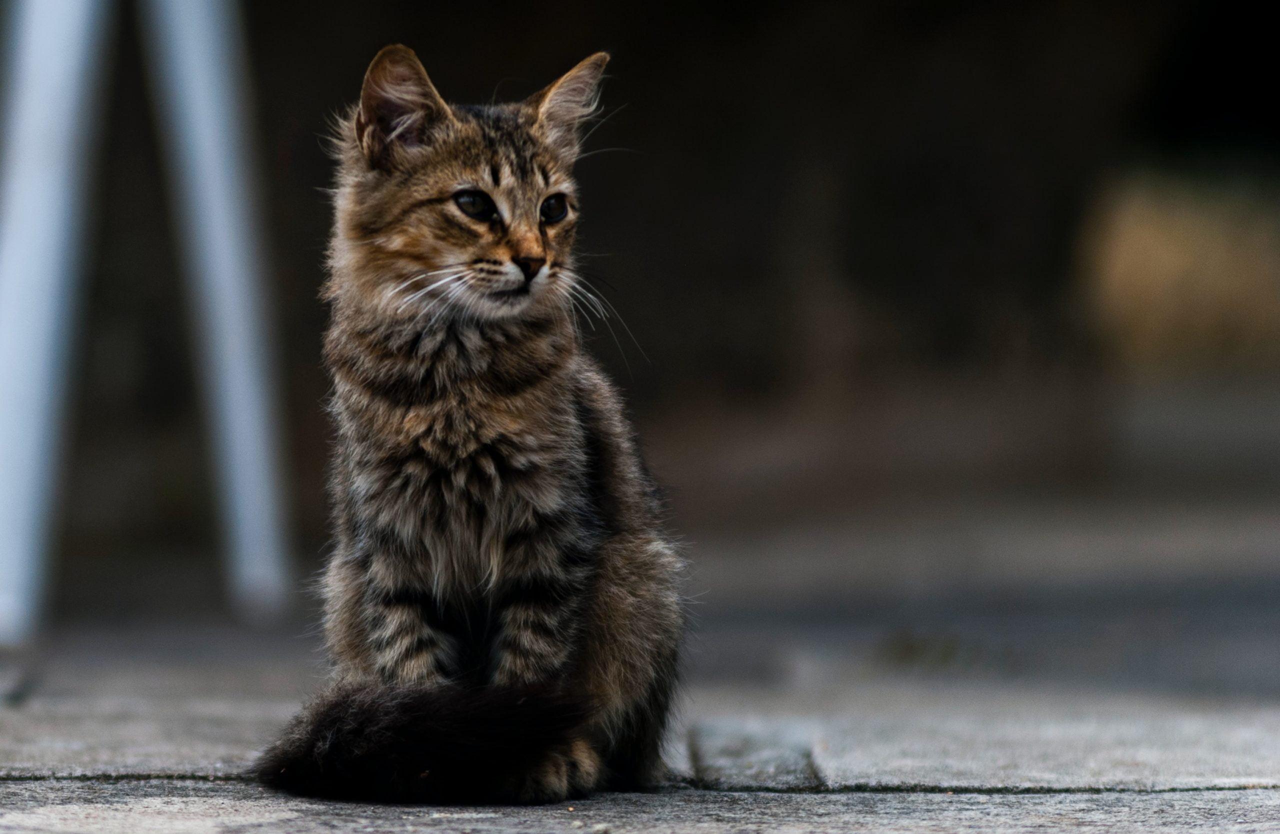Comida para gatos de Purina One (Análisis [year]) 1