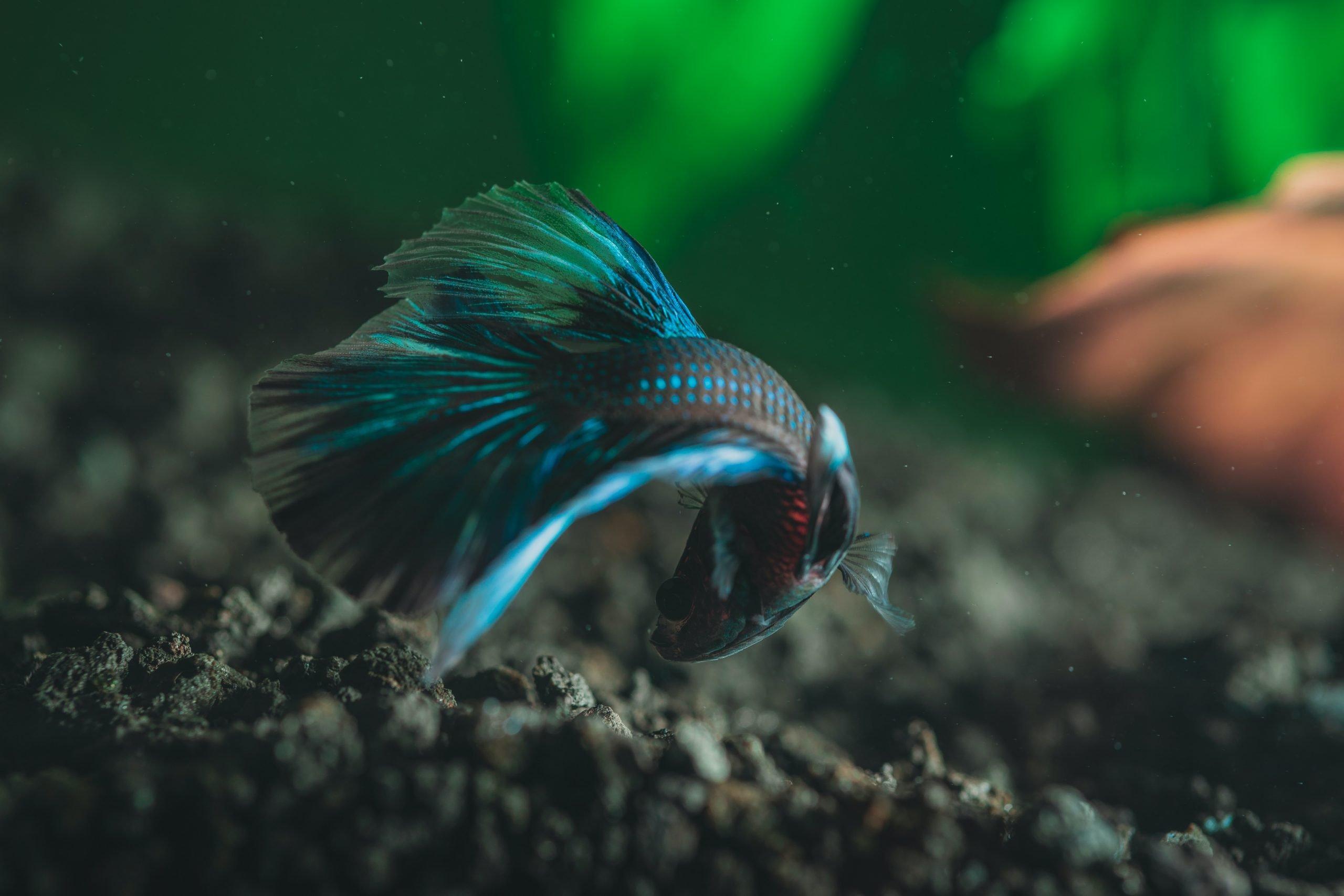 Mejores filtros para acuarios de peces Betta [year] (análisis) 1