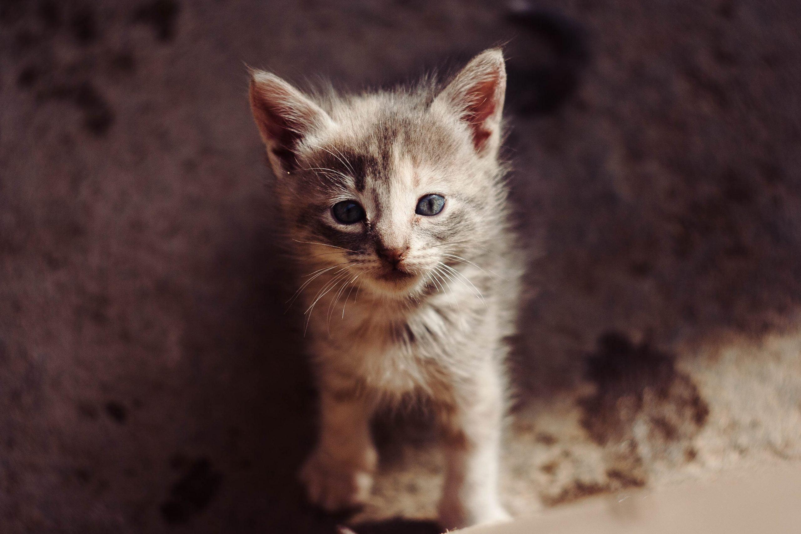 Comida para gatos Purina Beyond (Análisis [year]) 1