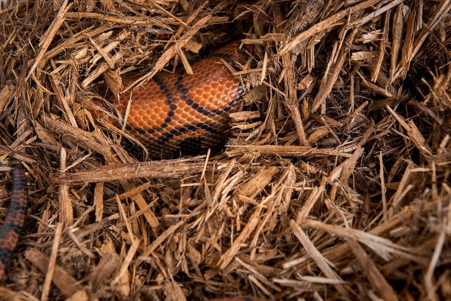 Mejores sustratos para terrarios de serpientes [year] (análisis) 1