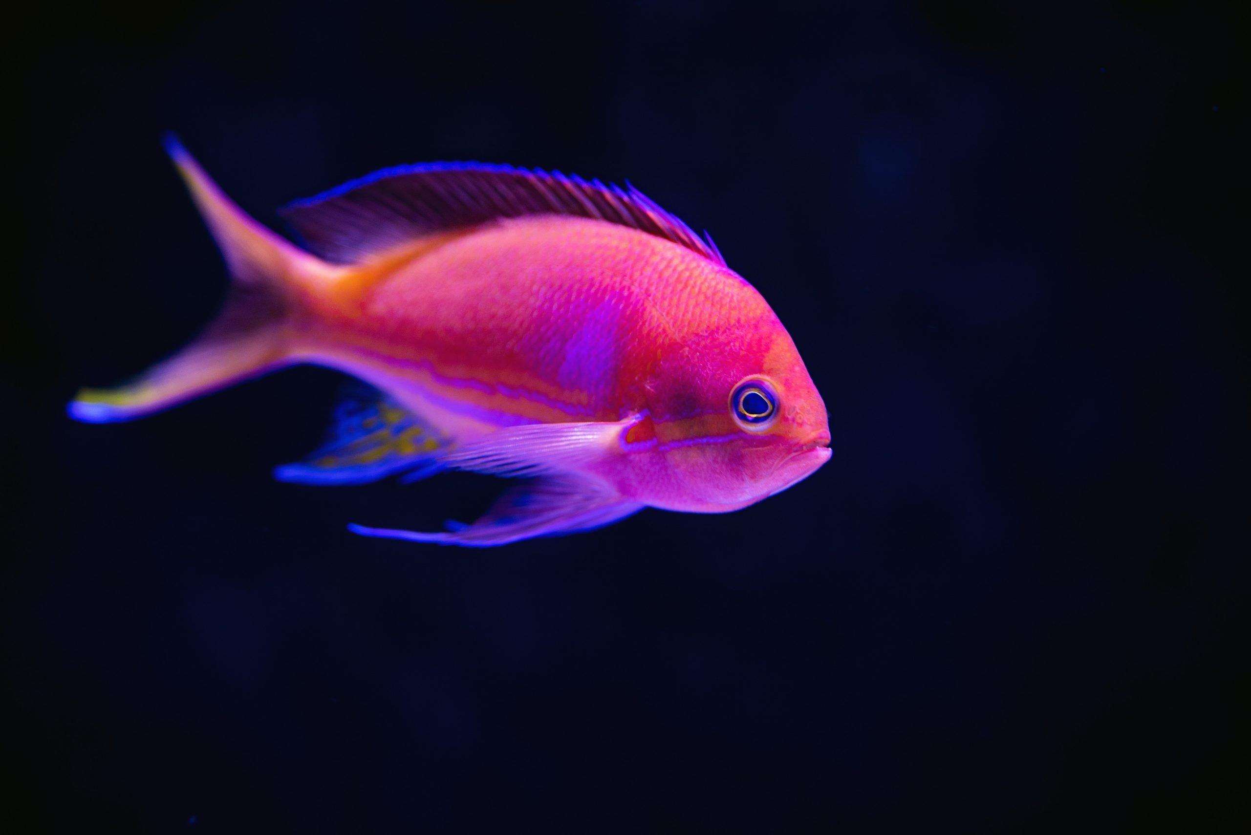 Cómo aclimatar nuevos peces en tu acuario de forma segura