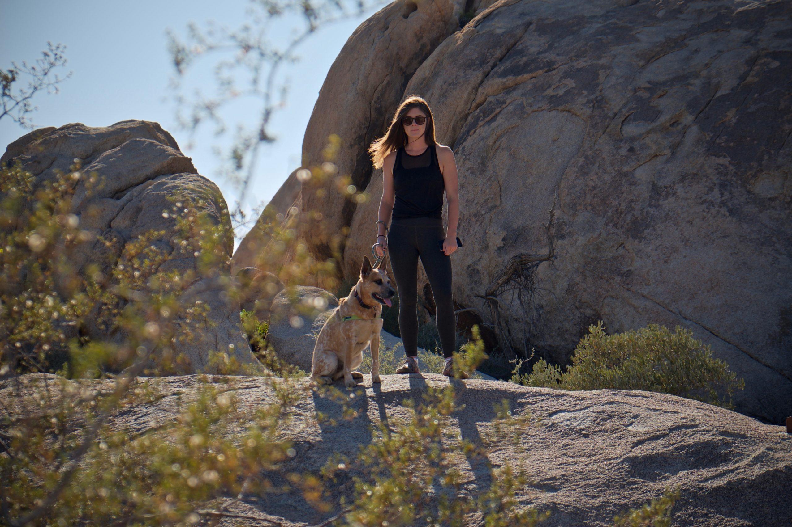 Mi perro no quiere pasear: 5 razones por las que tu perro se niega a pasear 6