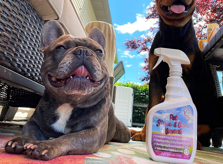 Mejores neutralizadores de olores para mascotas perros y gatos [year] (Análisis) 1