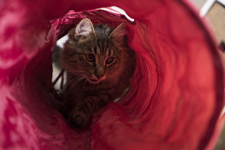 Los mejores túneles para gatos [year] (análisis) 1