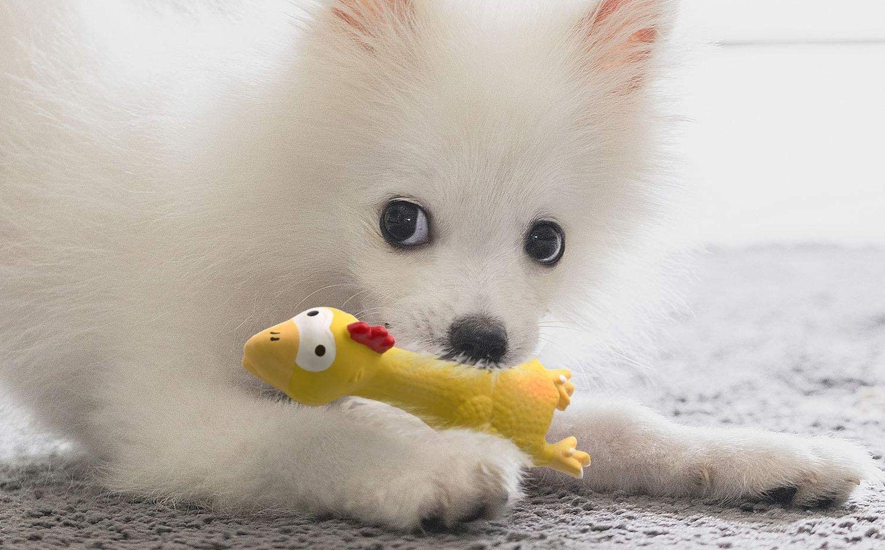 ¿Por qué a los perros les gustan los juguetes con sonido? 1