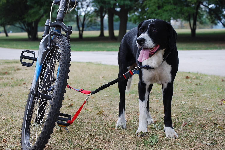 Las mejores correas para perro para bicicleta [year] (análisis) 1