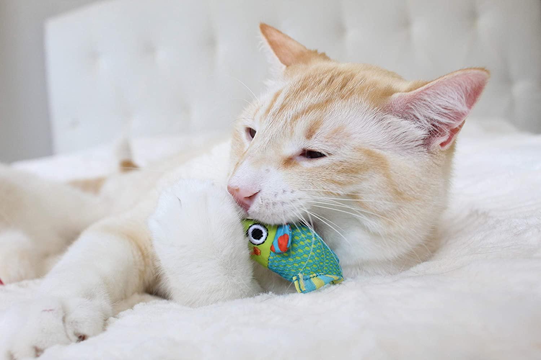 Los mejores juguetes masticables para gatos [year] (análisis) 1