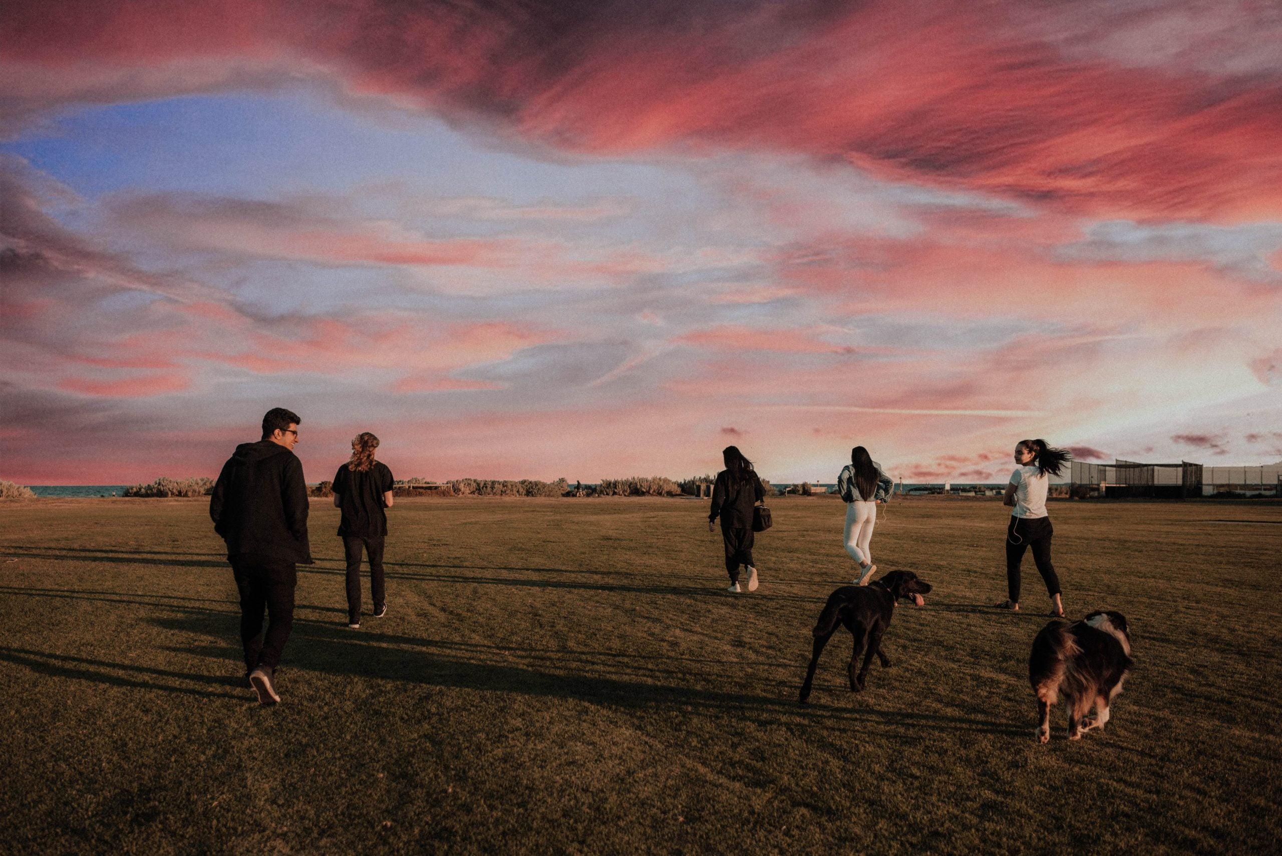 Paseo grupal con perros: 6 consejos para prepararlo para una caminata en grupo 1