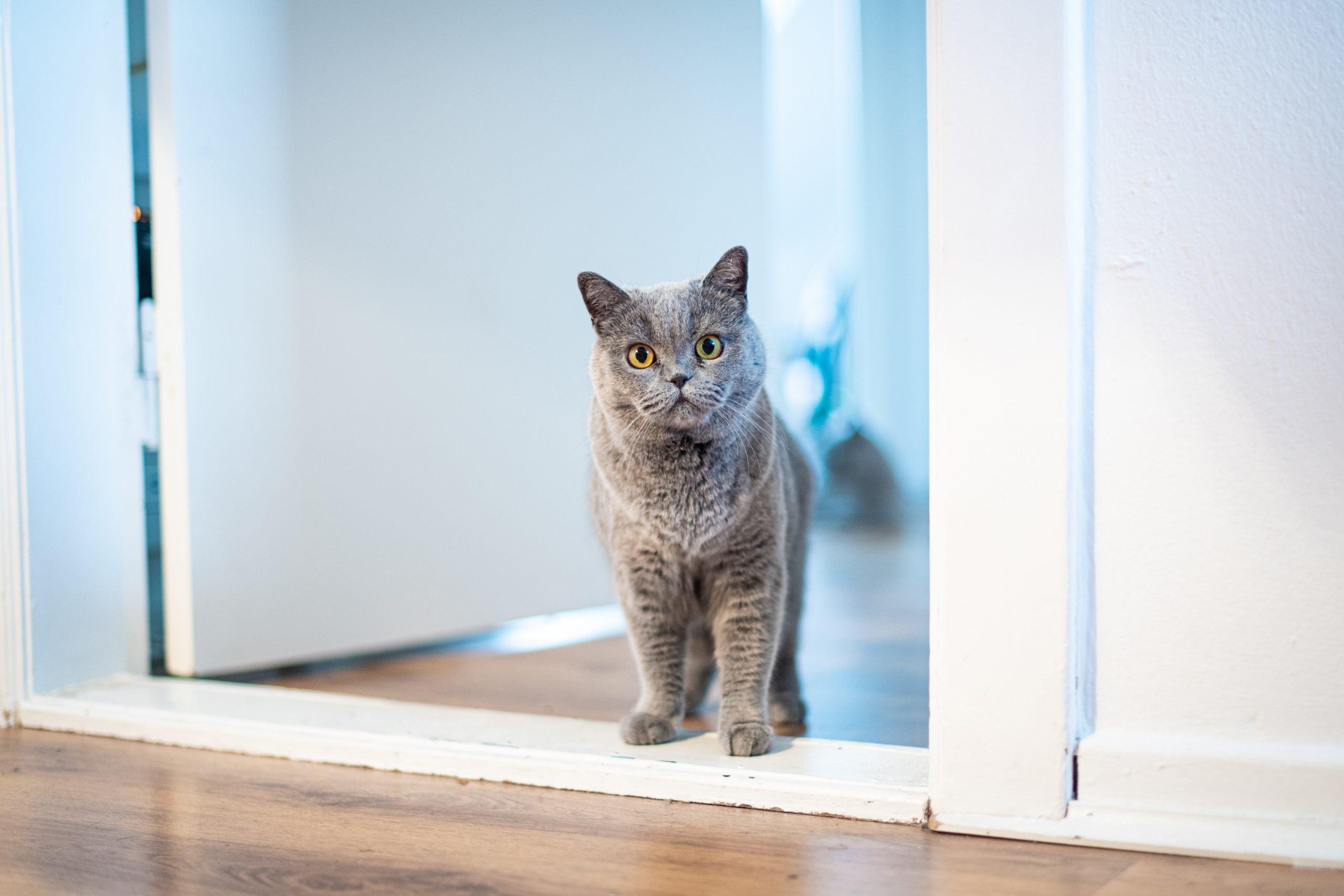 Mudarse con gatos: ayuda a tu gato a adaptarse a un nuevo hogar 1