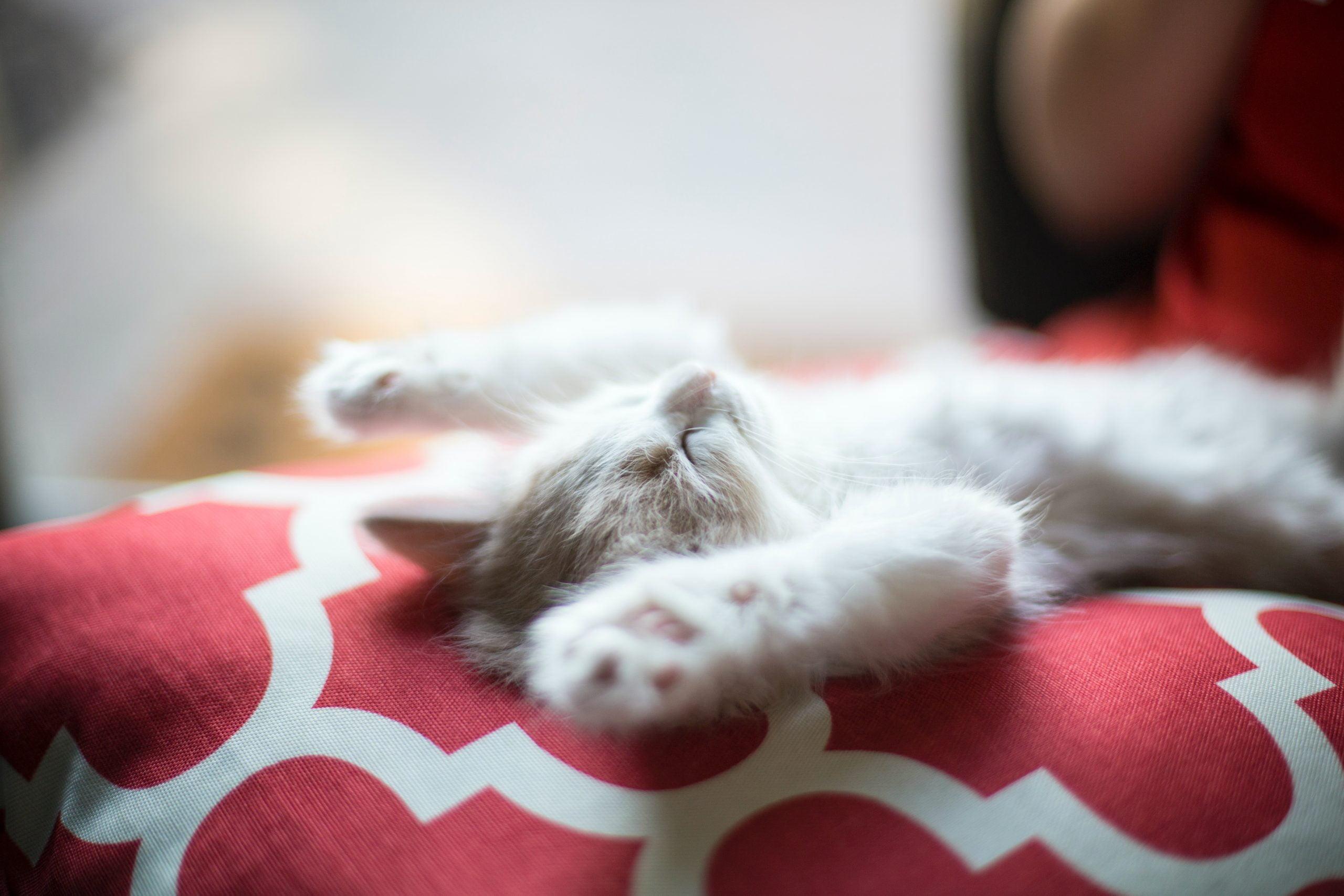 Las mejores golosinas relajantes para gatos [year] (análisis) 1