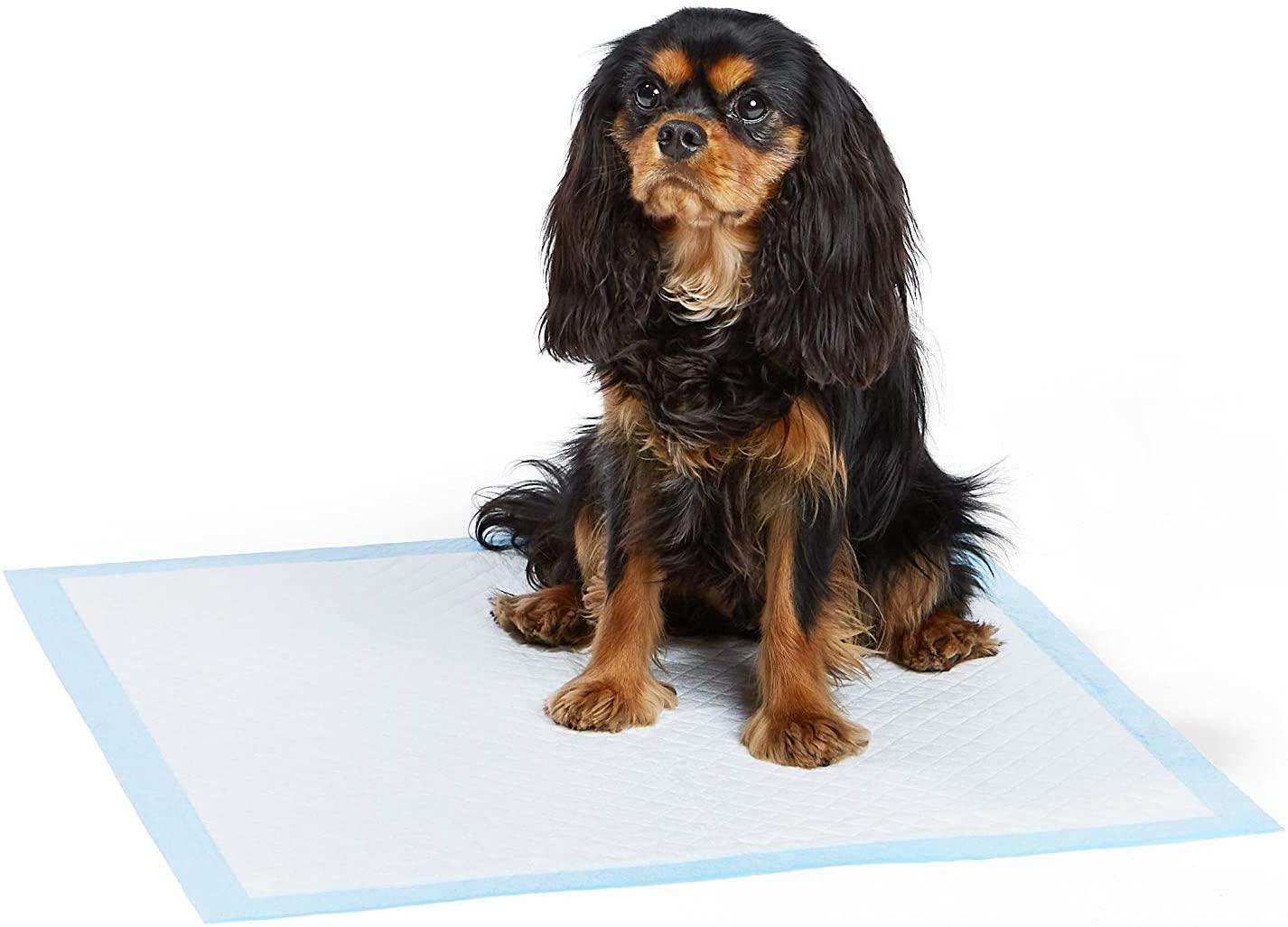 Almohadillas de entrenamiento para perros y cachorros AmazonBasics 1