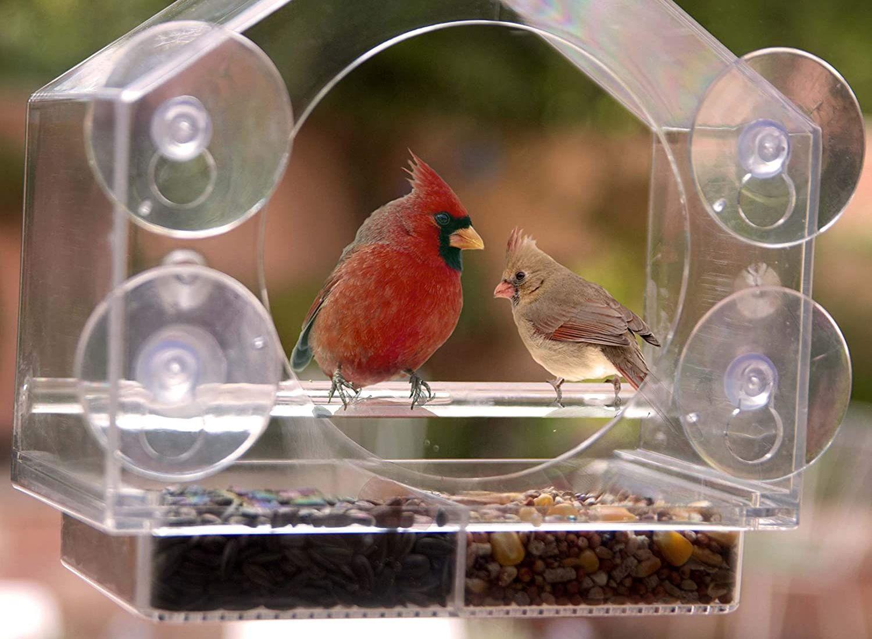 Los mejores comederos para aves para ventana [year] (análisis) 1