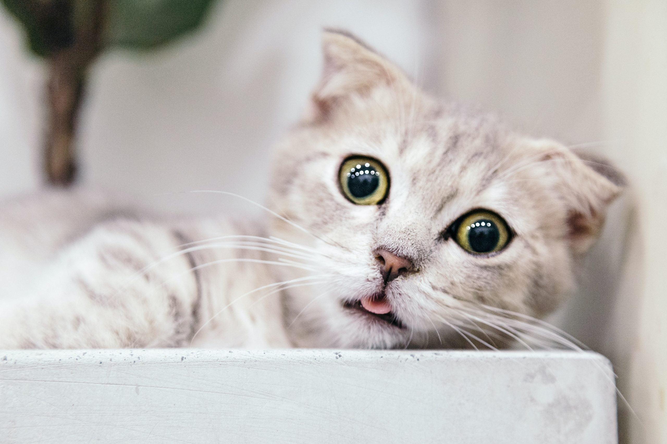 ¿Los gatos tienen emociones?