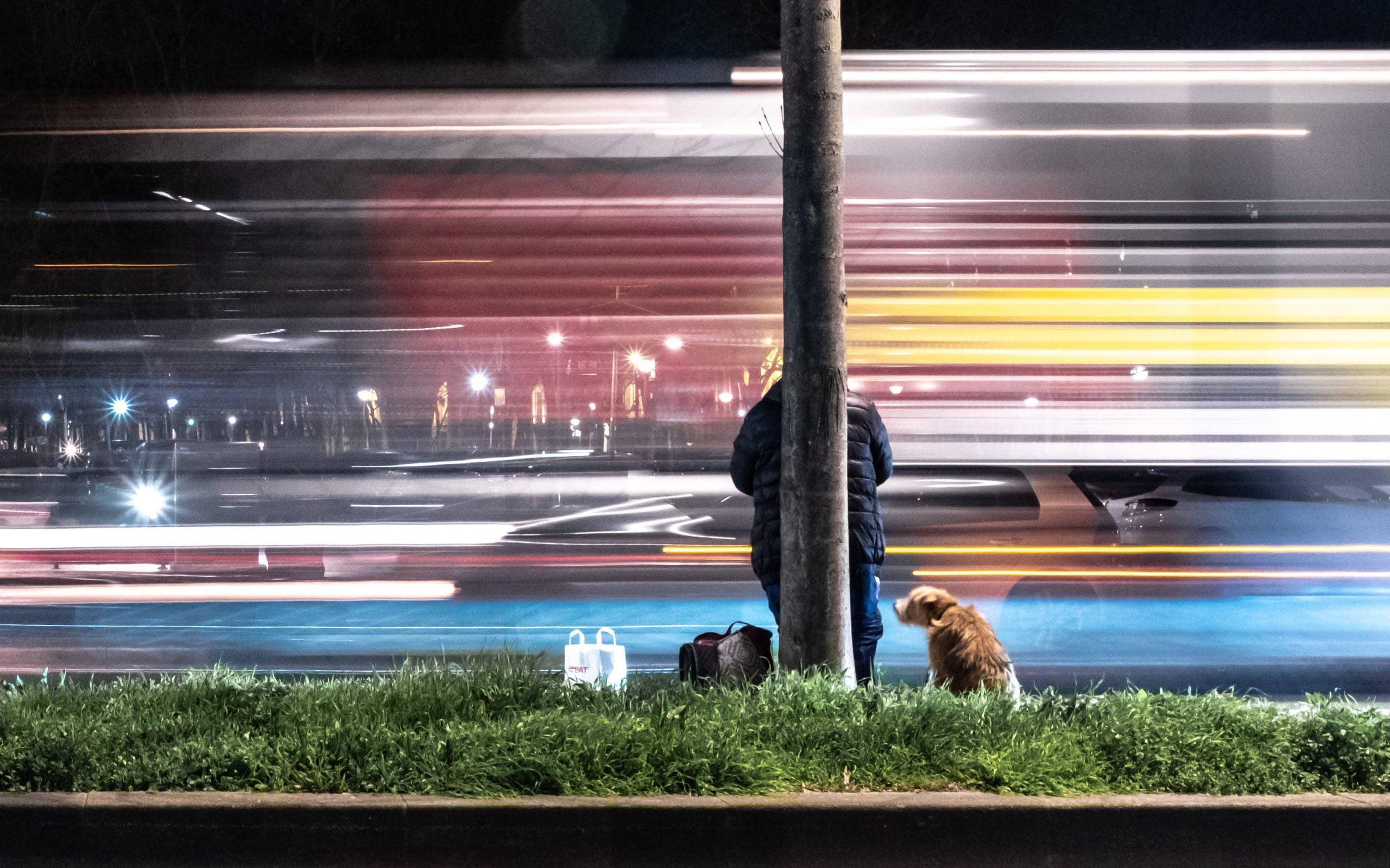 Cómo viajar en metro con tu perro 1