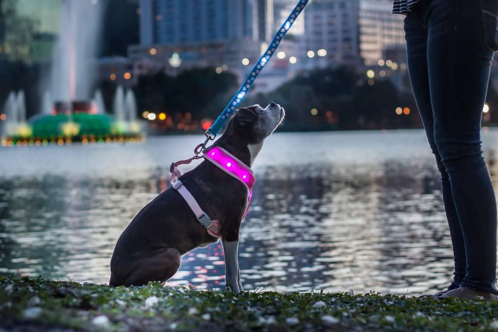 Mejores arneses LED para perros del 2021 (análisis) 1