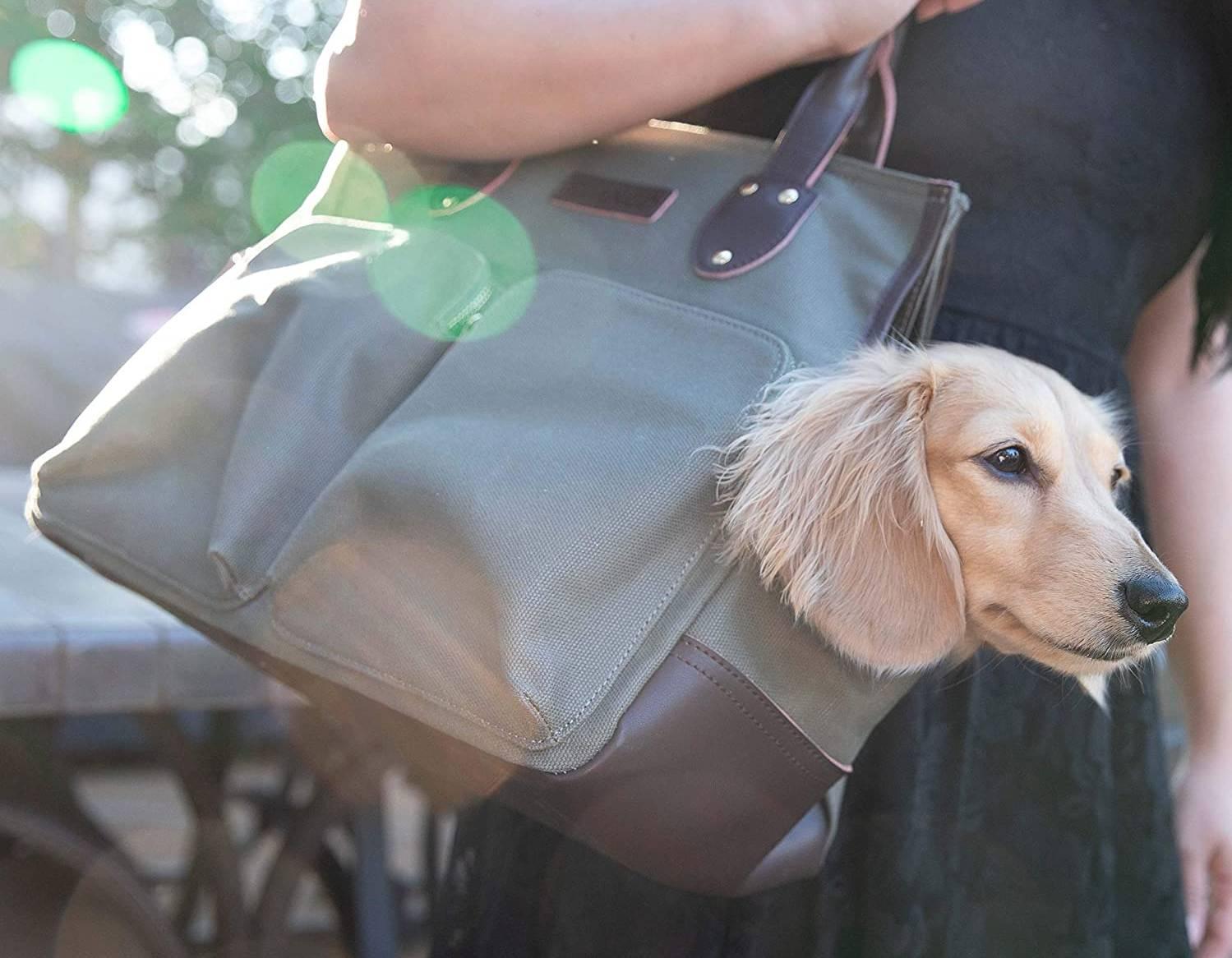 Los mejores bolsos para perros (transporte) [year] (análisis) 1