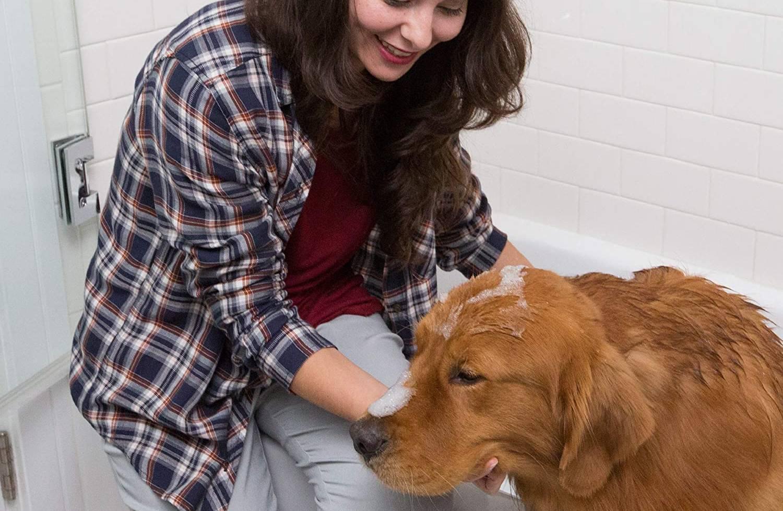 Mejores champús anticaspa para perros [year] (análisis) 1