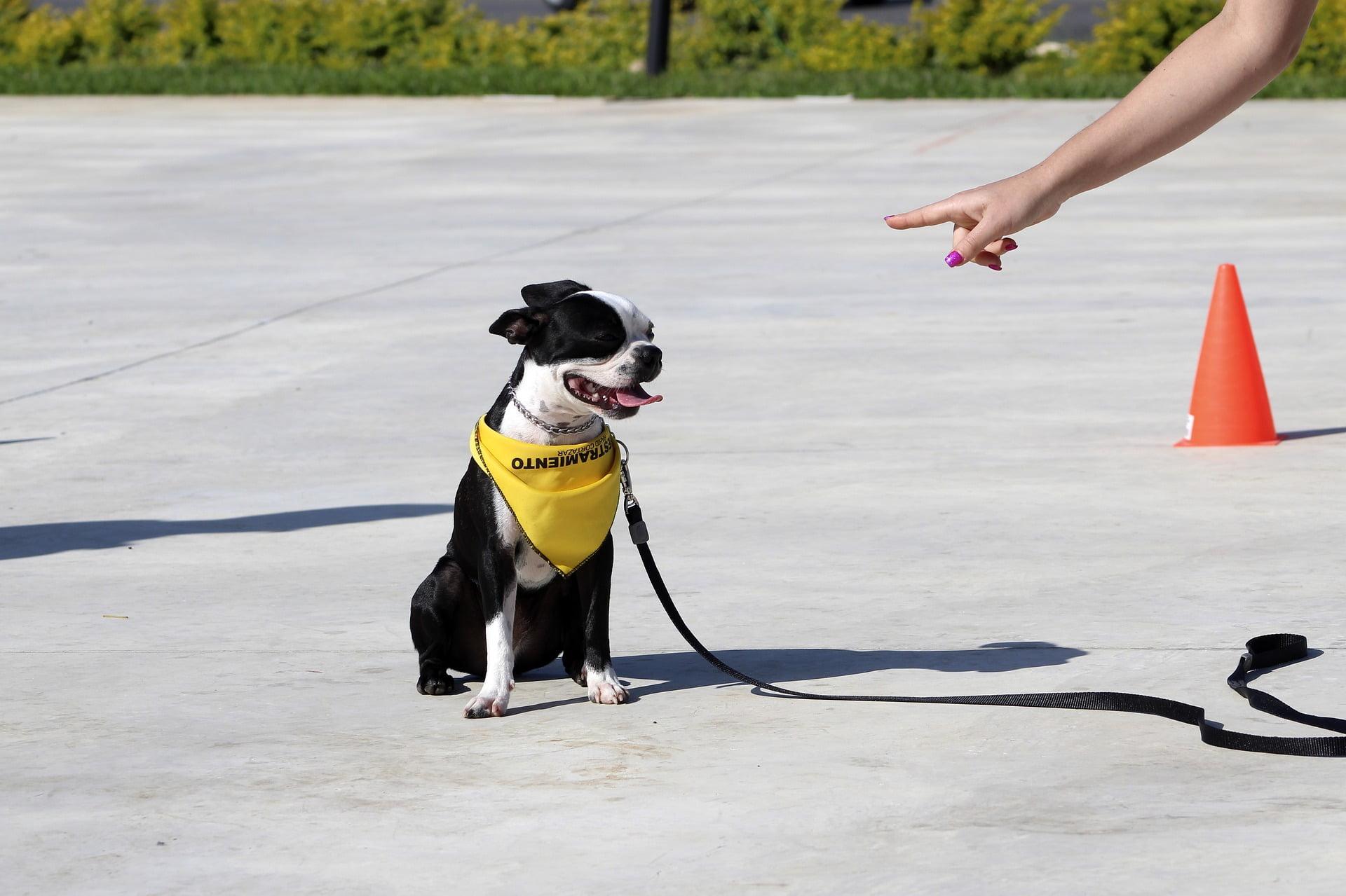 Adiestramiento de perros con clicker en 5 sencillos pasos 1