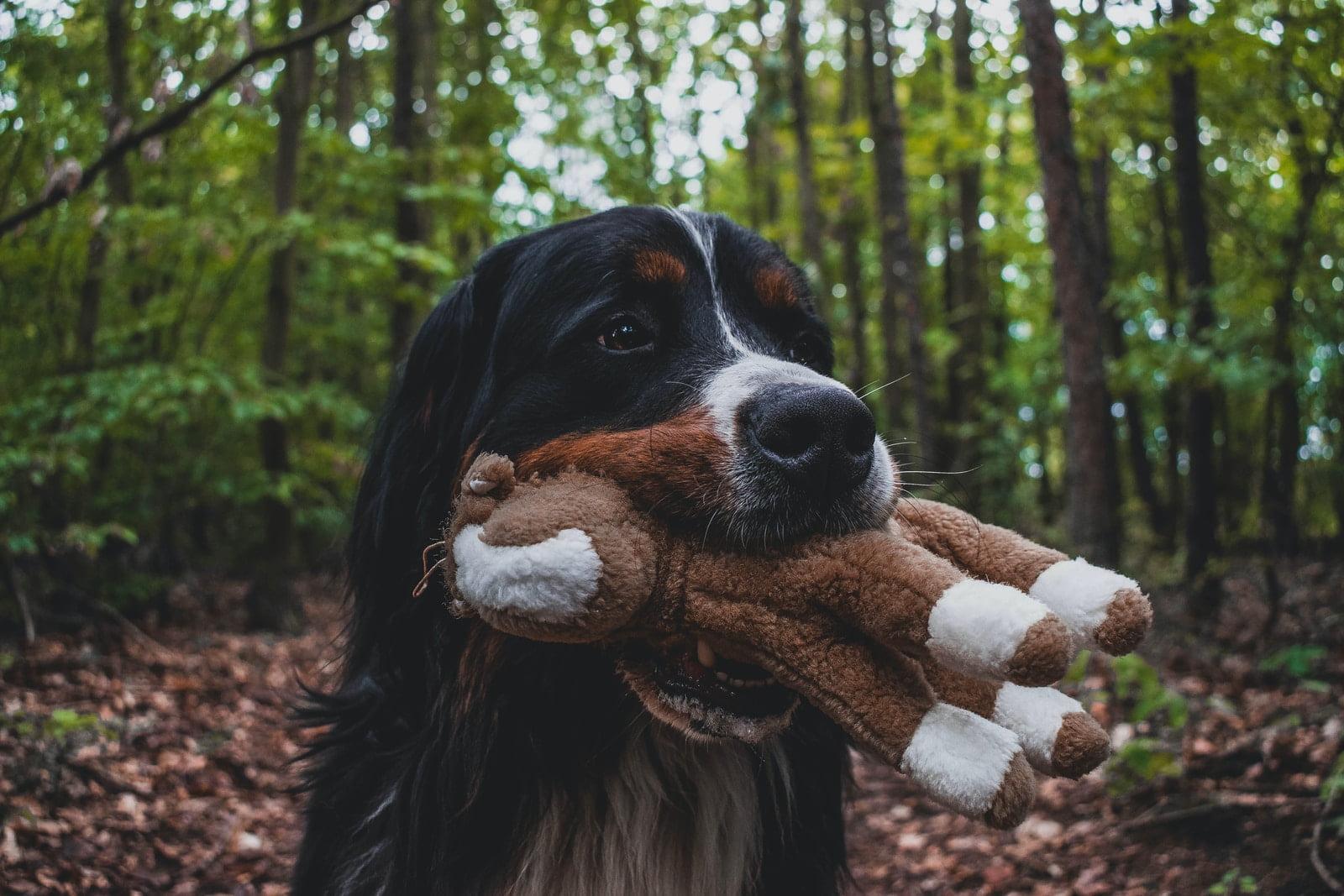 ¿Por qué mi perro me trae sus juguetes al llegar a casa?