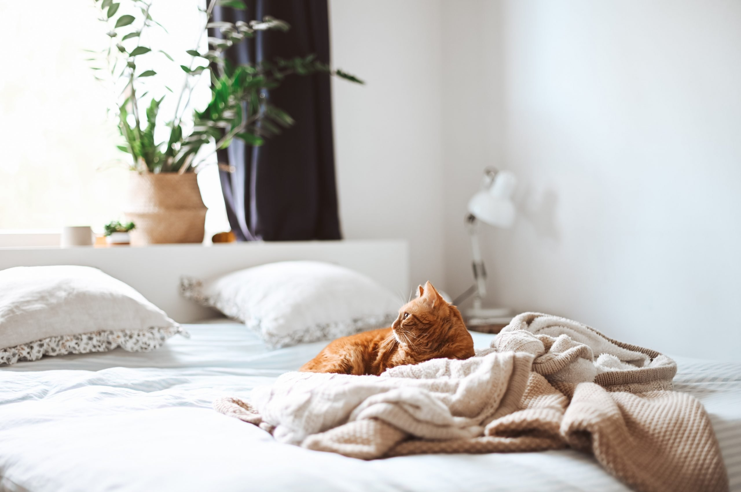 ¿Por qué mi gato orina en la cama? 1