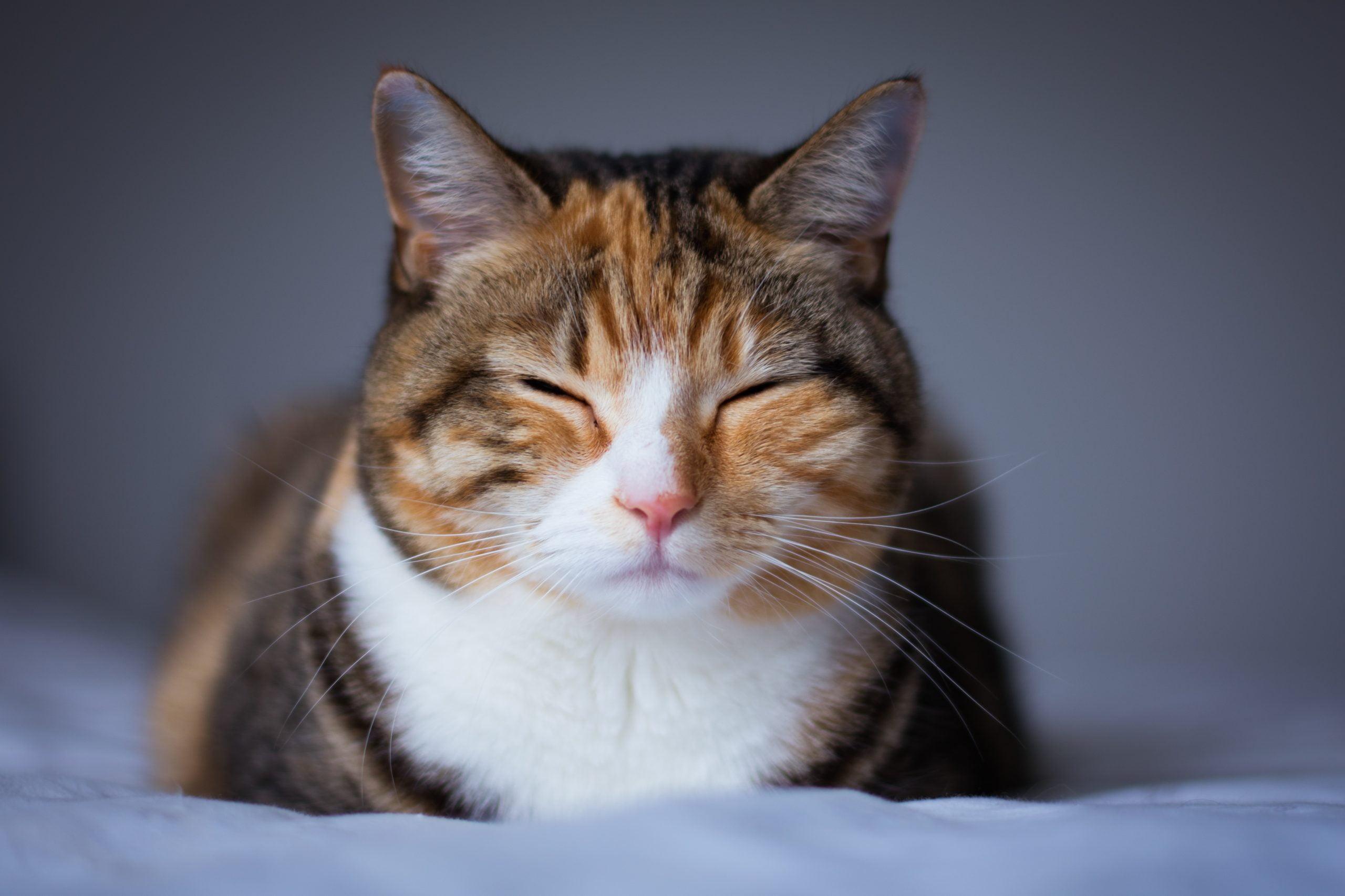Infección del tracto urinario en gatos: 5 señales de que su gato tiene UTI 1