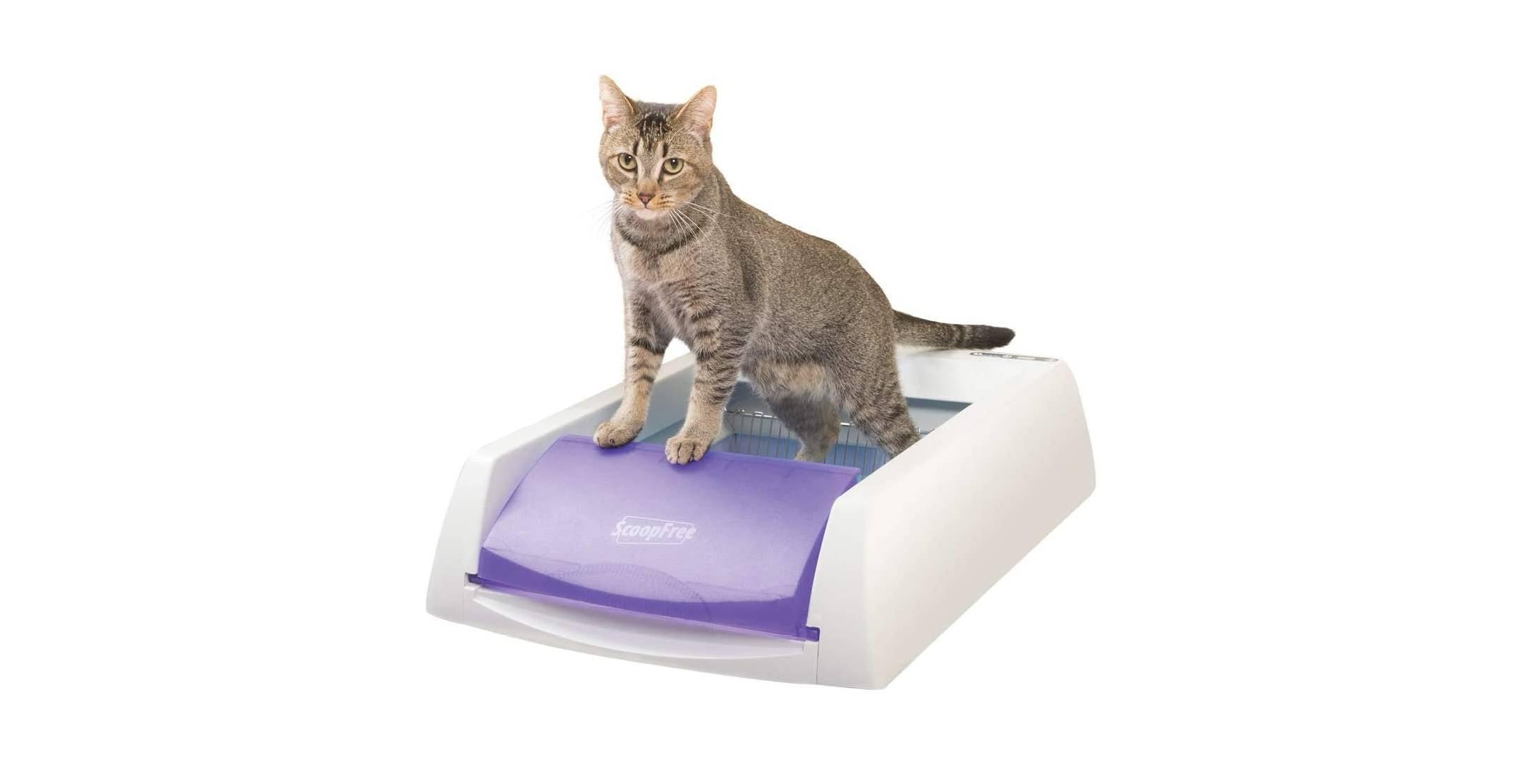 Análisis de la caja de arena automática PetSafe ScoopFree [year] 1
