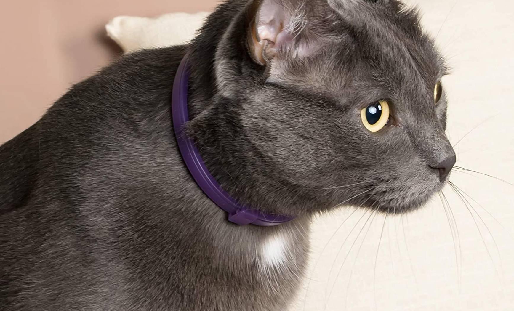 collares calmantes para gatos