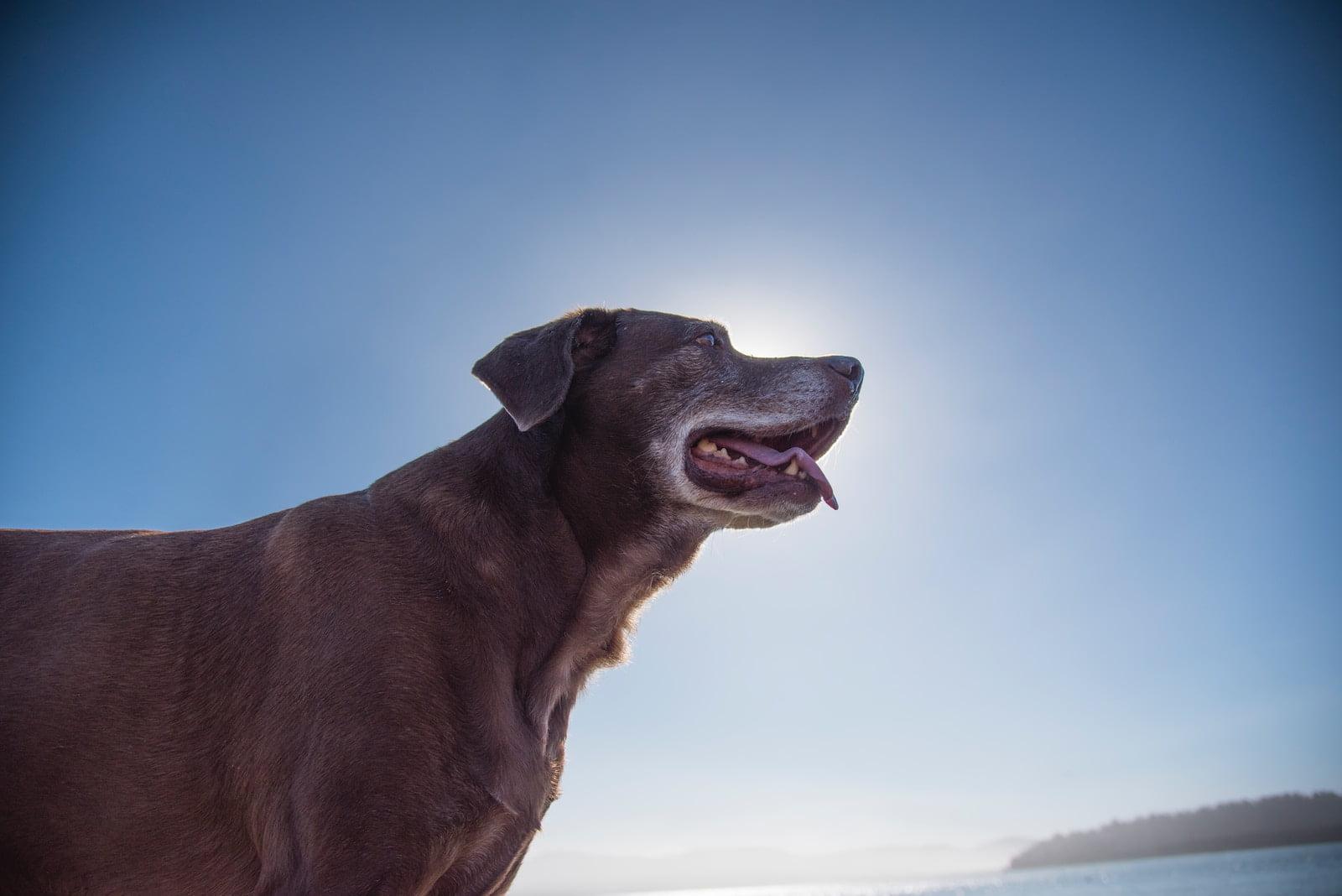Cómo calcular los años de un perro respecto a los años humanos