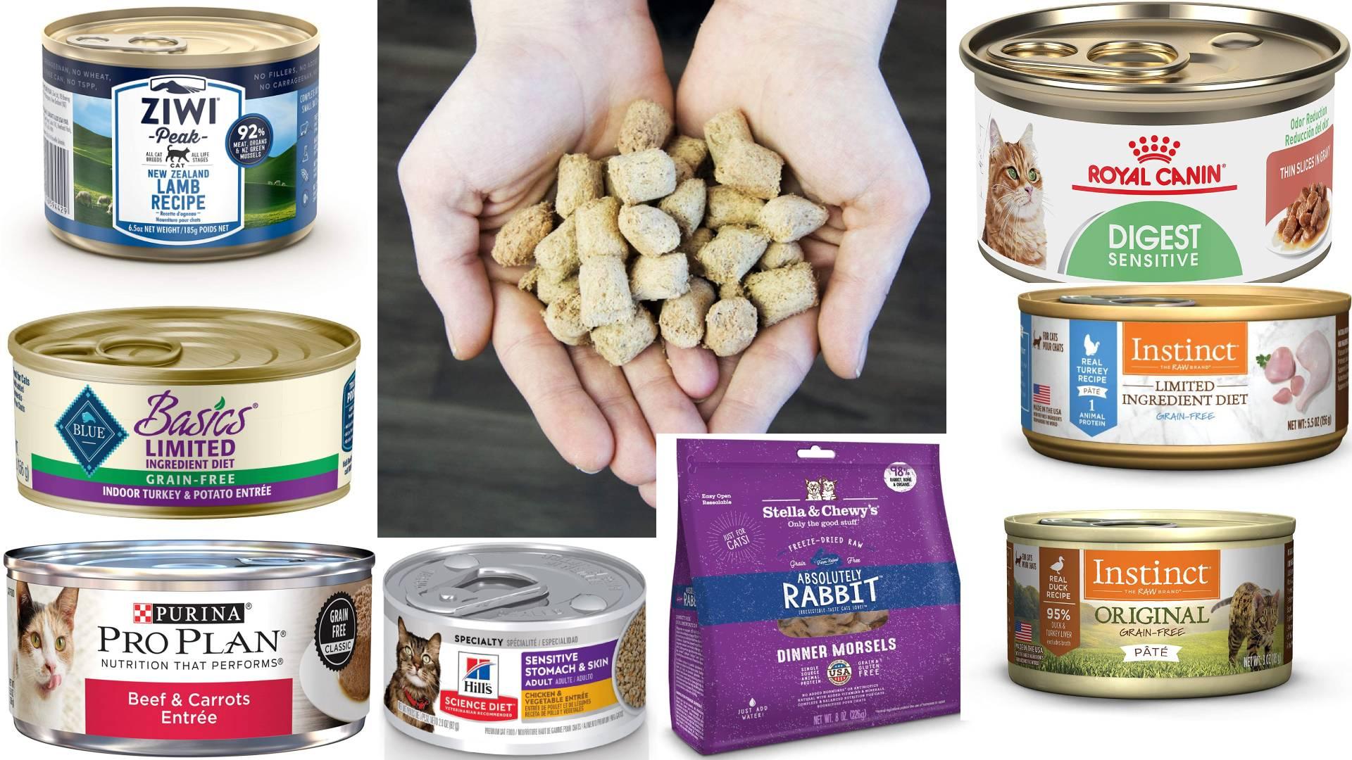 mejor comida para gatos con pancreatitis