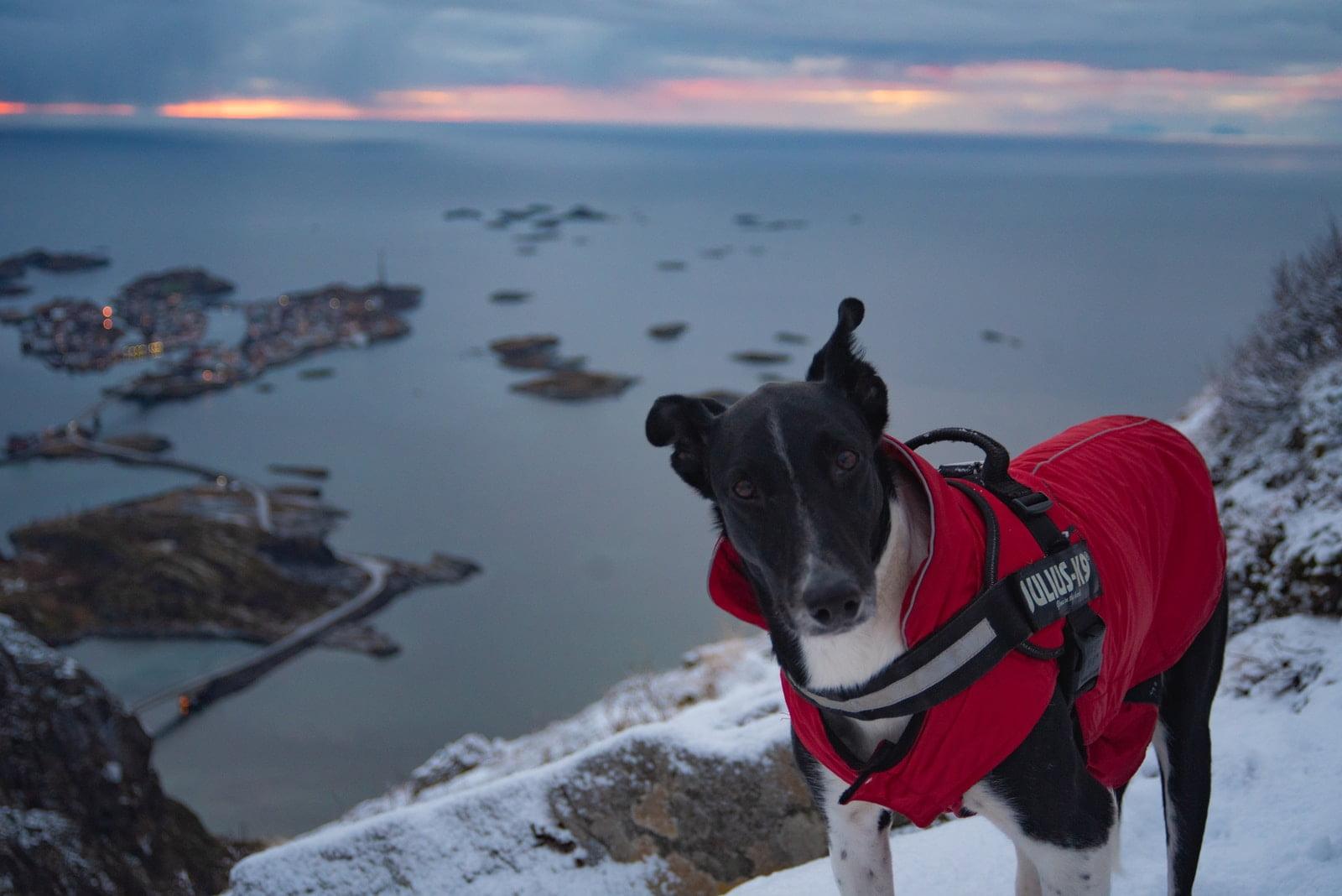 Mejores chalecos de caza para perros