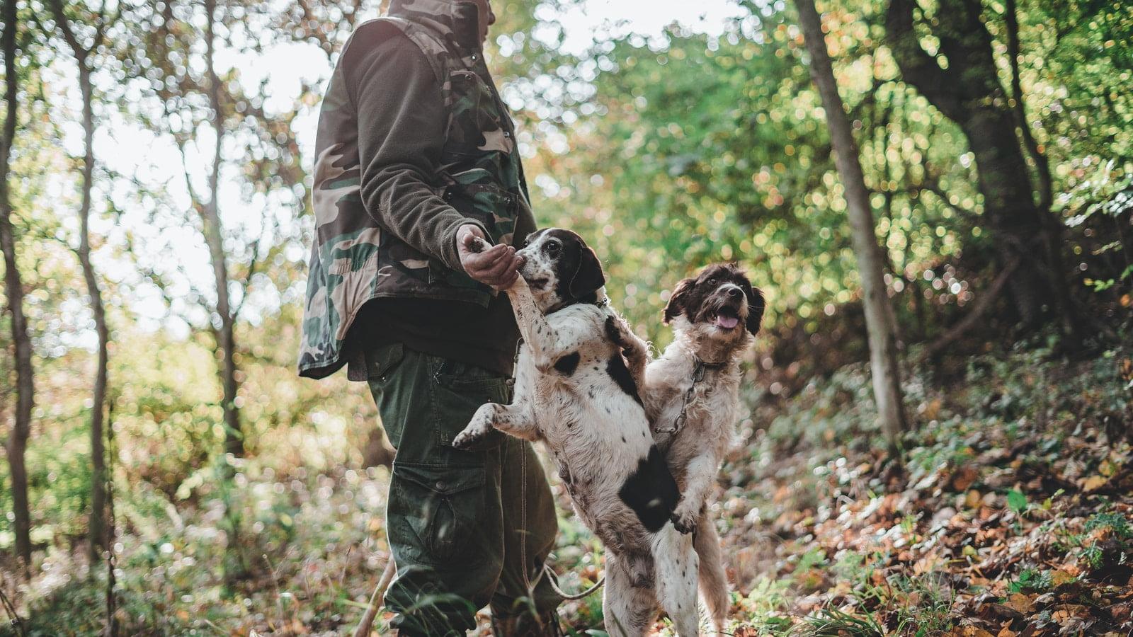 Mejor comida para perros de caza [year] (análisis) 1