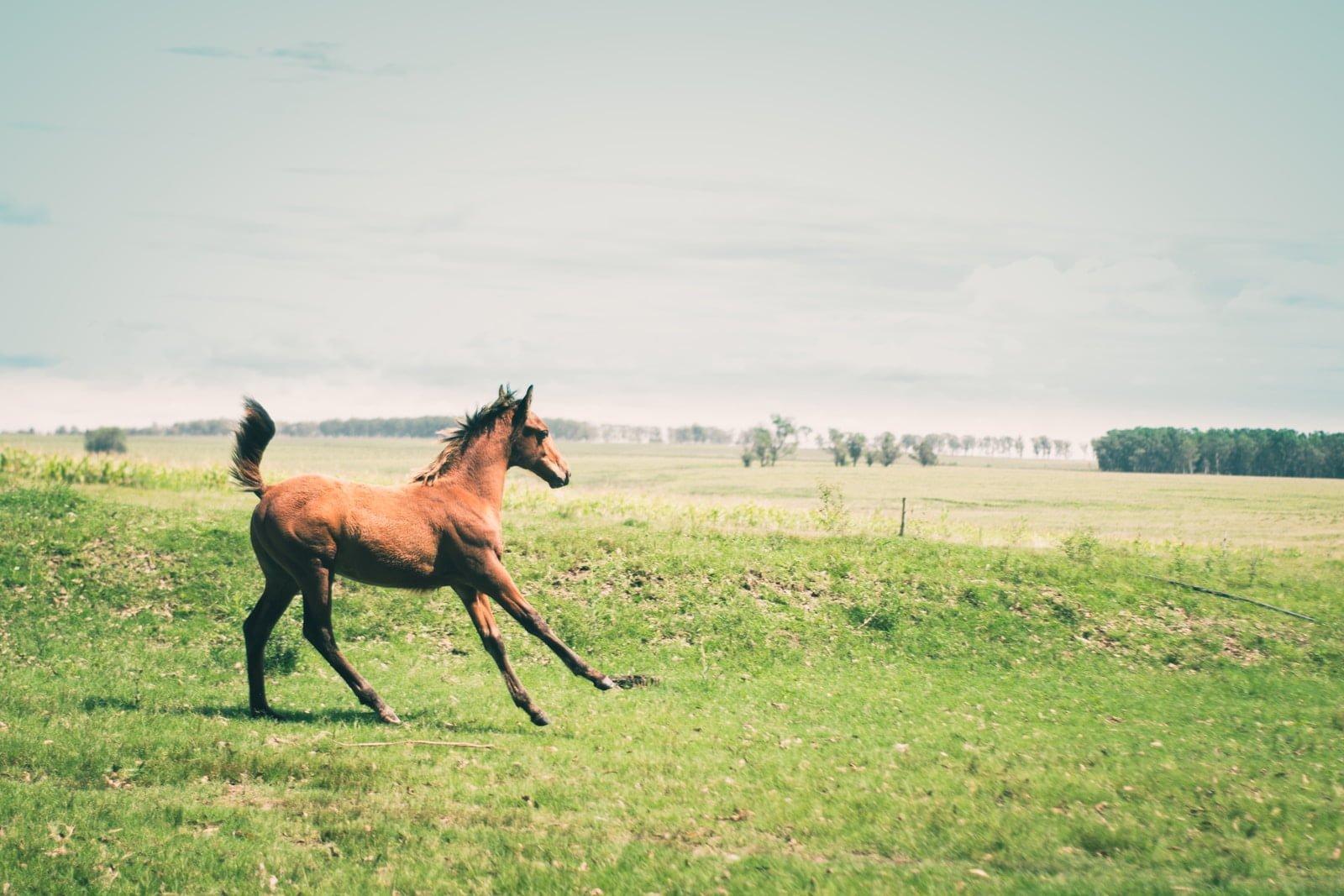 Velocidad de un caballo