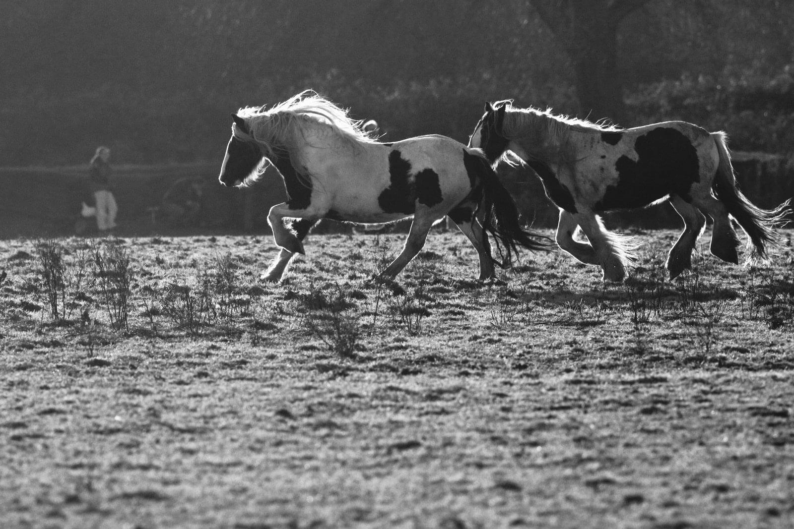 ¿Cuánto tiempo puede correr un caballo en 1 día?