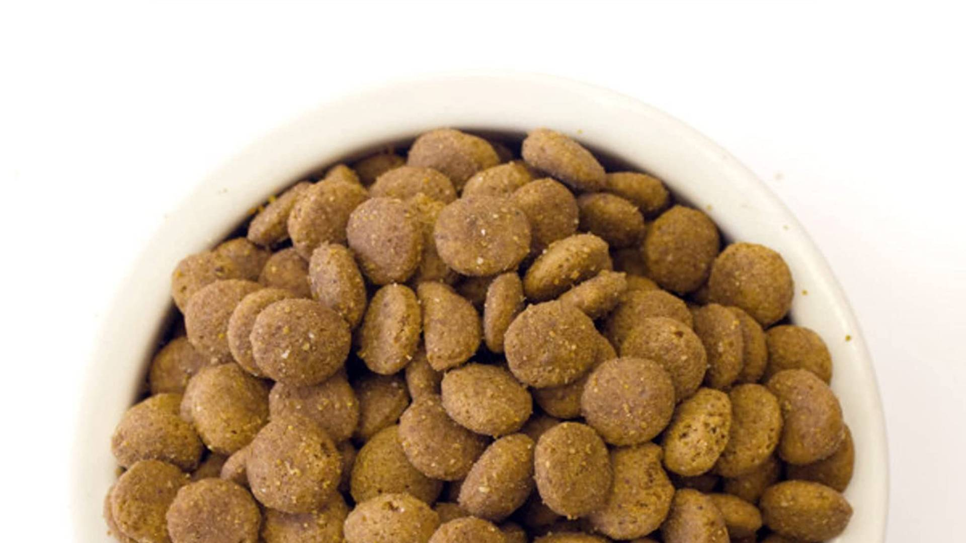 comida para perros de razas grandes