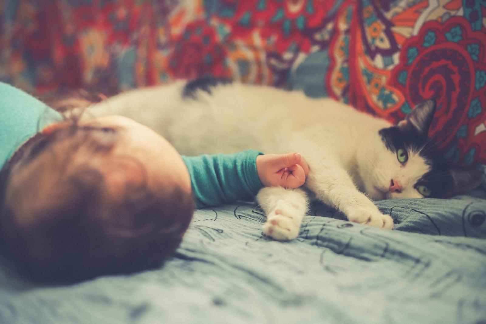 Presentar un gato al bebé - Mantener al bebé a salvo y al gatito seguro